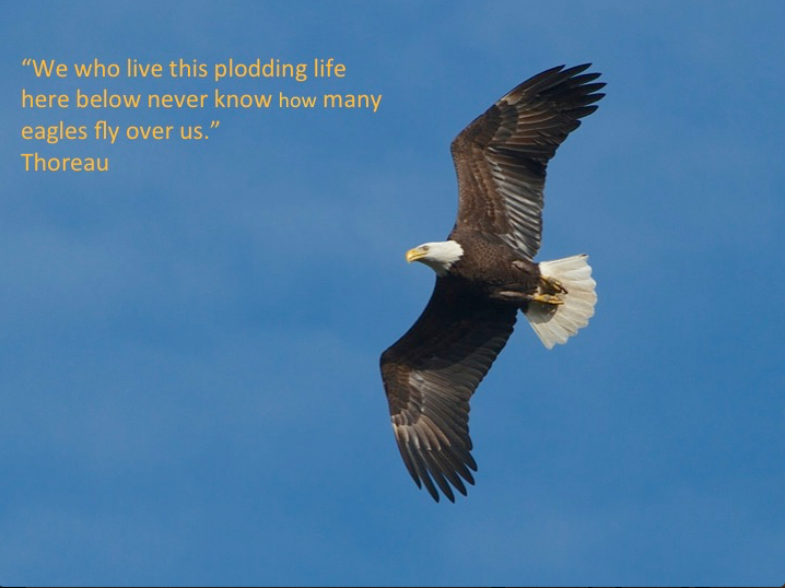 I too look up to see a majestic Bald Eagle fly overhead...I remember the words of Thoreau..