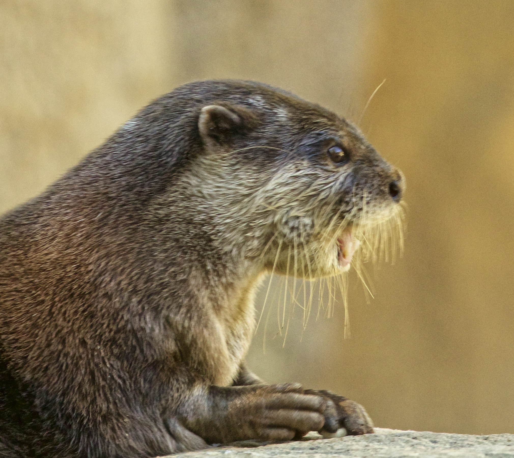Otto the Otter says CALL YOUR MAMA and tell her you love her! Then show her you love her.