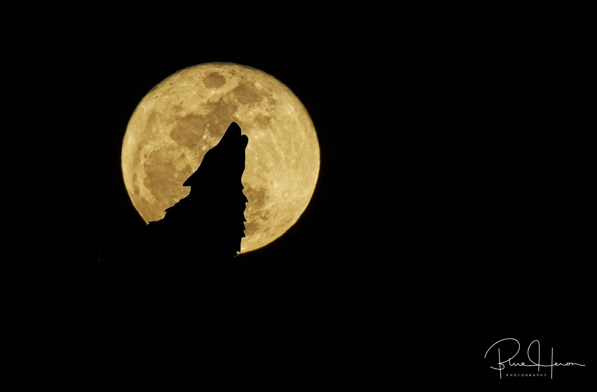 Wolf Moon of 12 Jan 17 ...did you hear the howling..it wasn't the wind