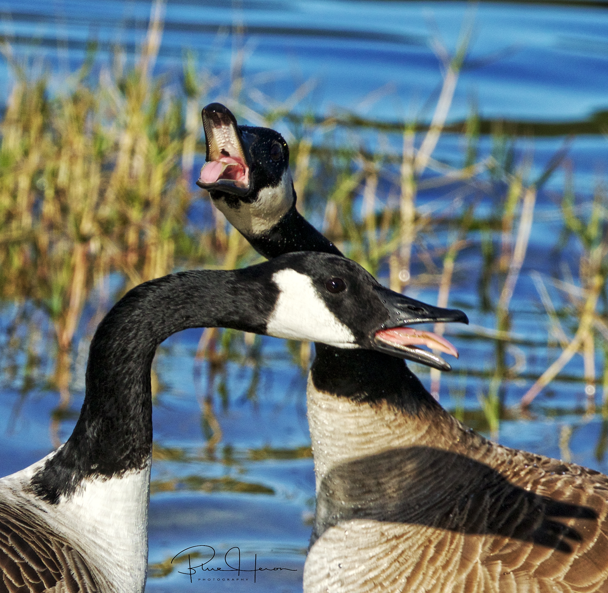 Well Your Moma has duck feet! Honk Honk my tail feathers