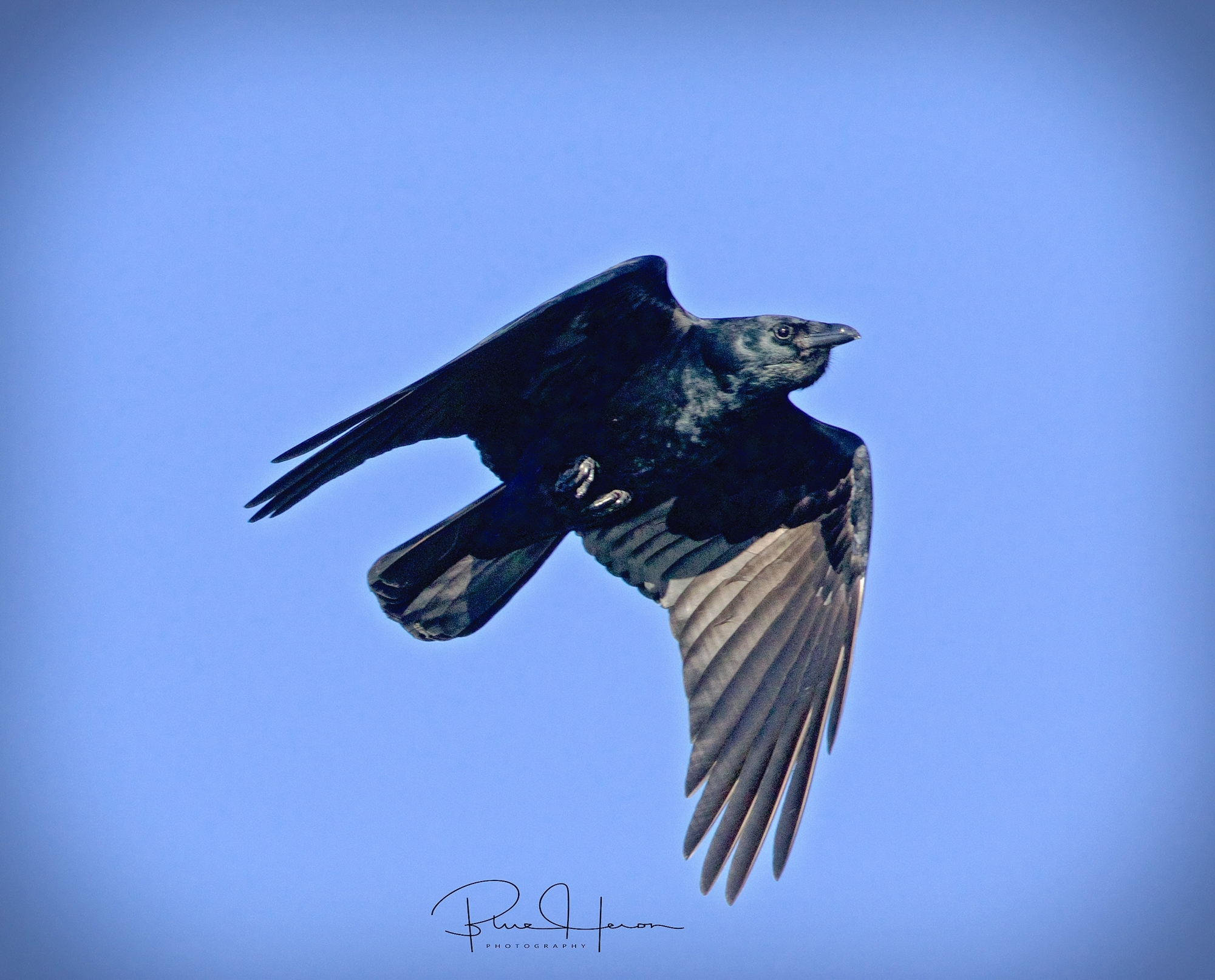 Dark shadows in the sky as a crow sweeps by..