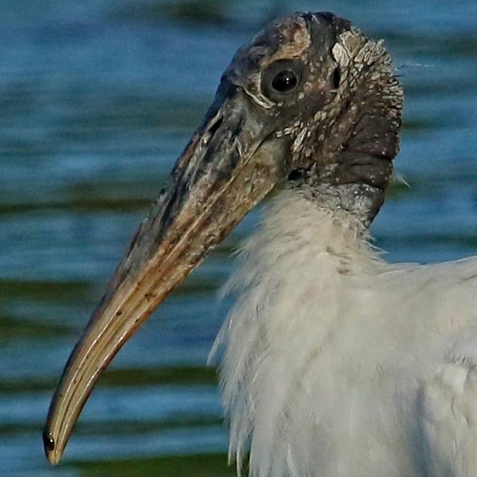 I get the ugly award..I am a Wood Stork..don't recommend my   barber...