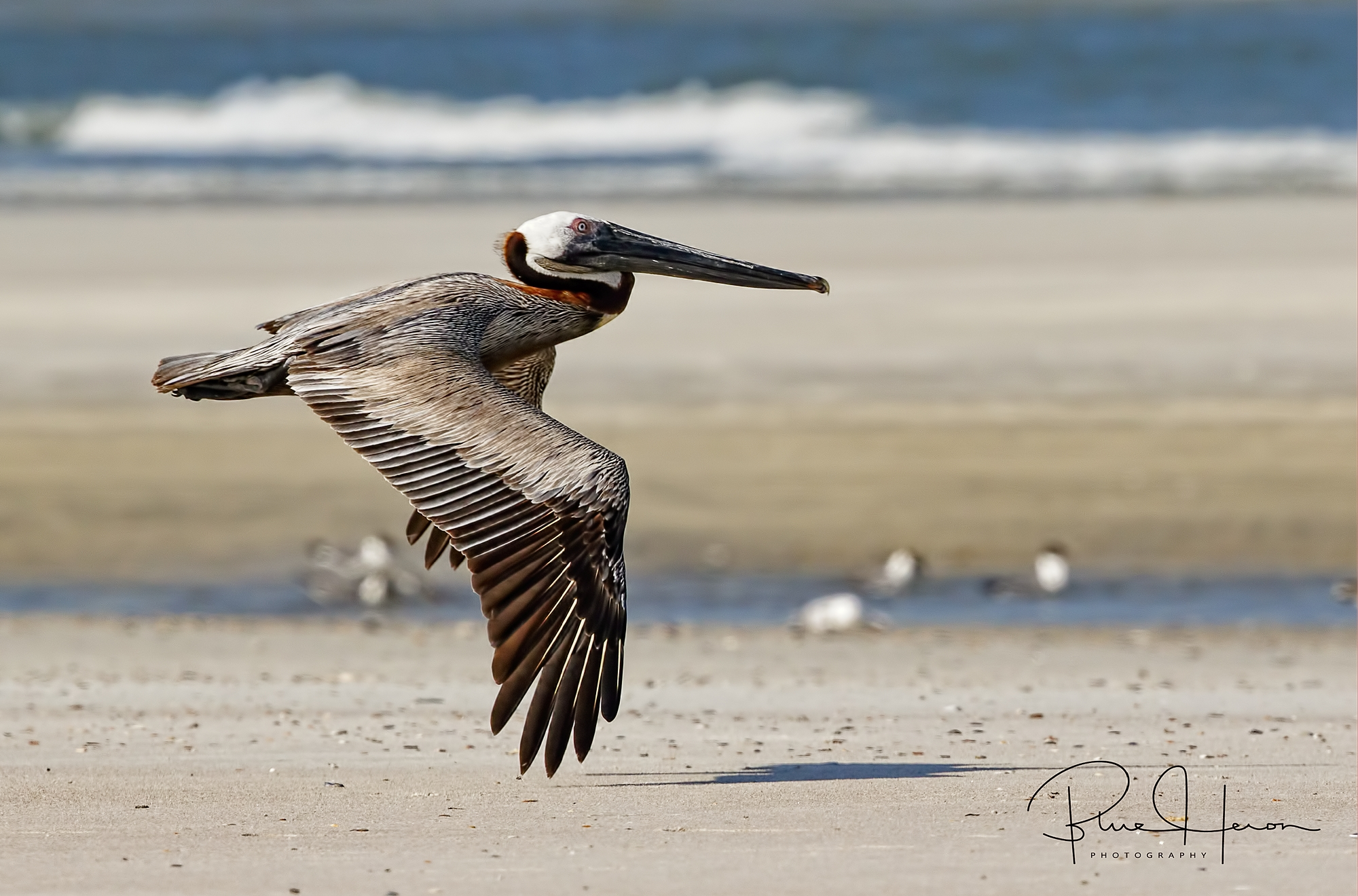 This low flyer continued its glide over the beach, inches from the sand..