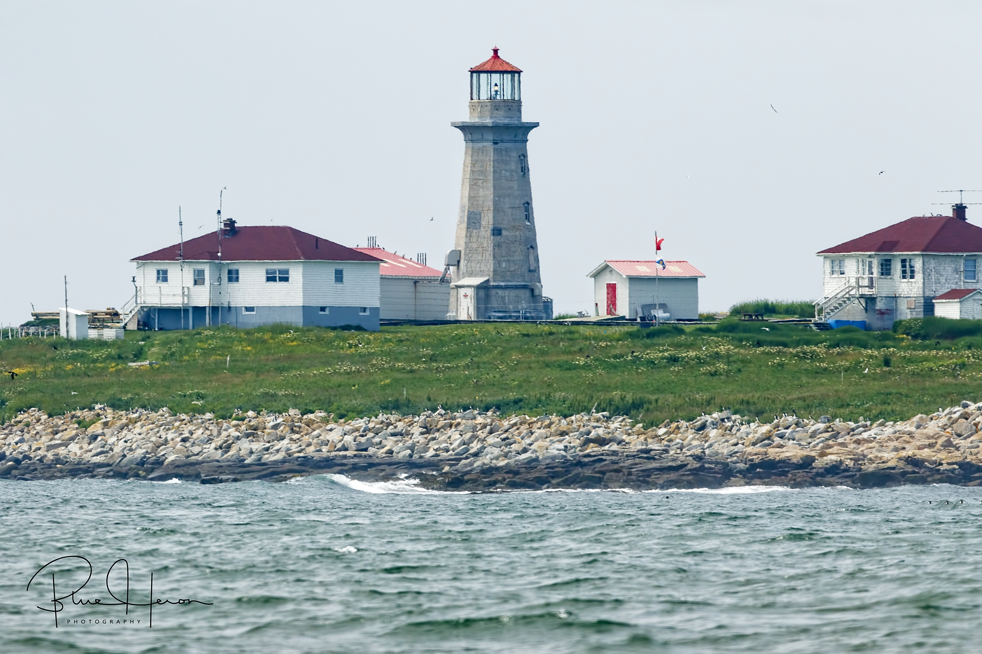 Machias Seal Island, still disputed and manned by a Canadian Lighthouse crew is home to thousands of breeding Alcids which include Murres, Razorbills, and the Atlantic Puffin.