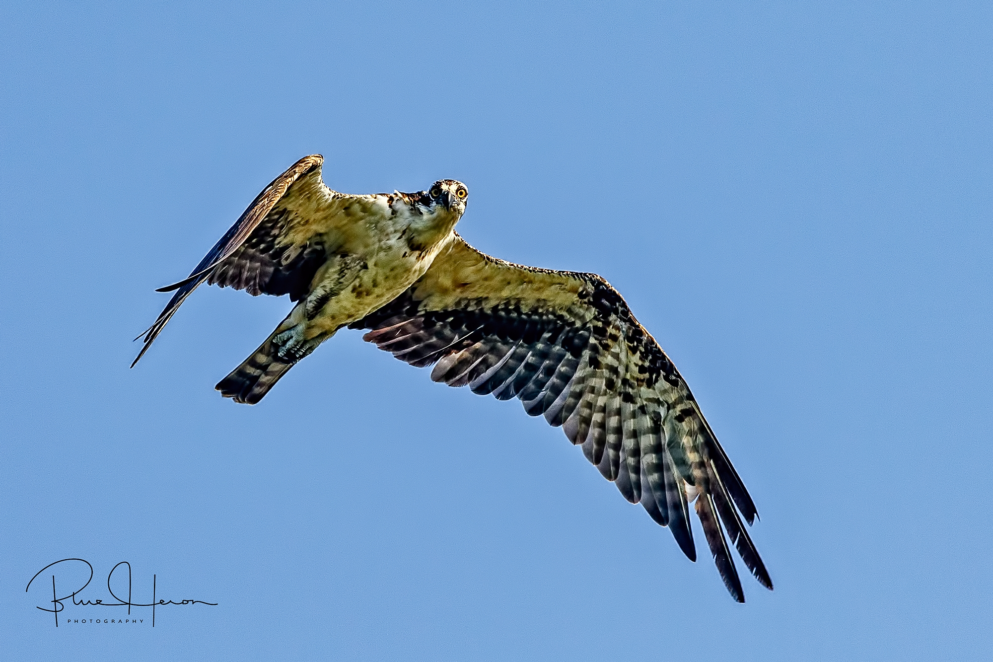 Not to worry, someone from above has His eye on me just like this ole Osprey
