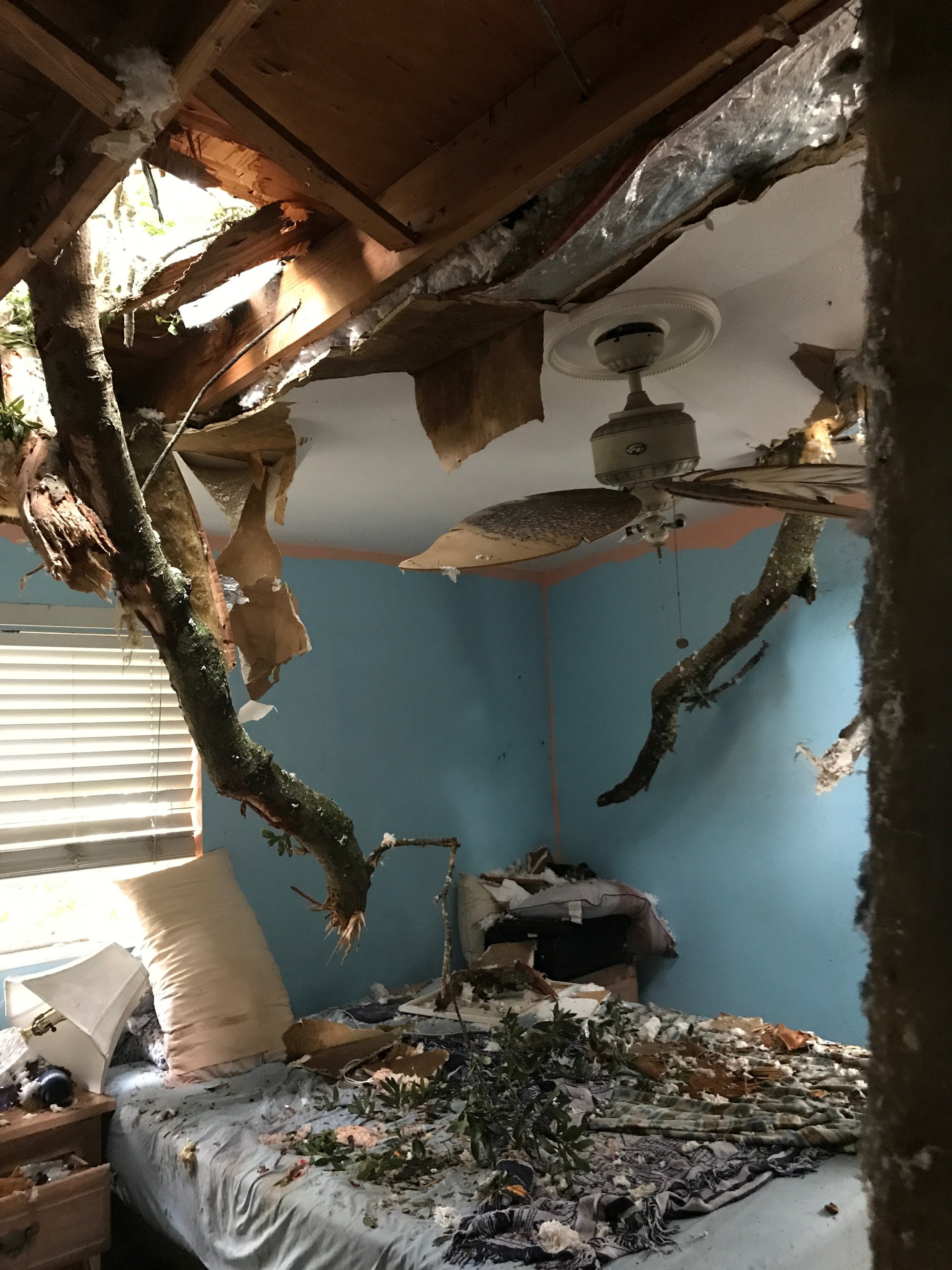 The lady who lives here is fighting for her life, the tree impaled her leg nearly killing her before she was able to be rescued..she had five Dachsunds which needed care, our friend is taking care of three of them..keep her in prayer