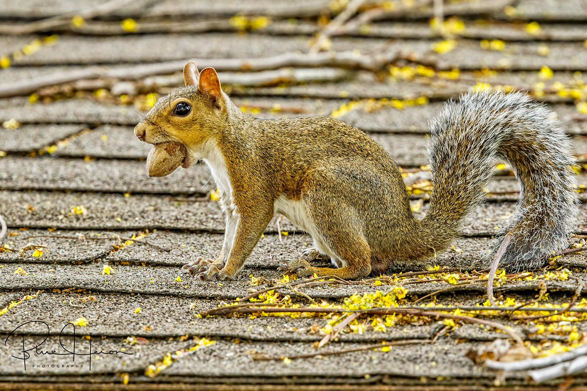 Some of my readers think I am nuts or squirrely lately...wonder why?