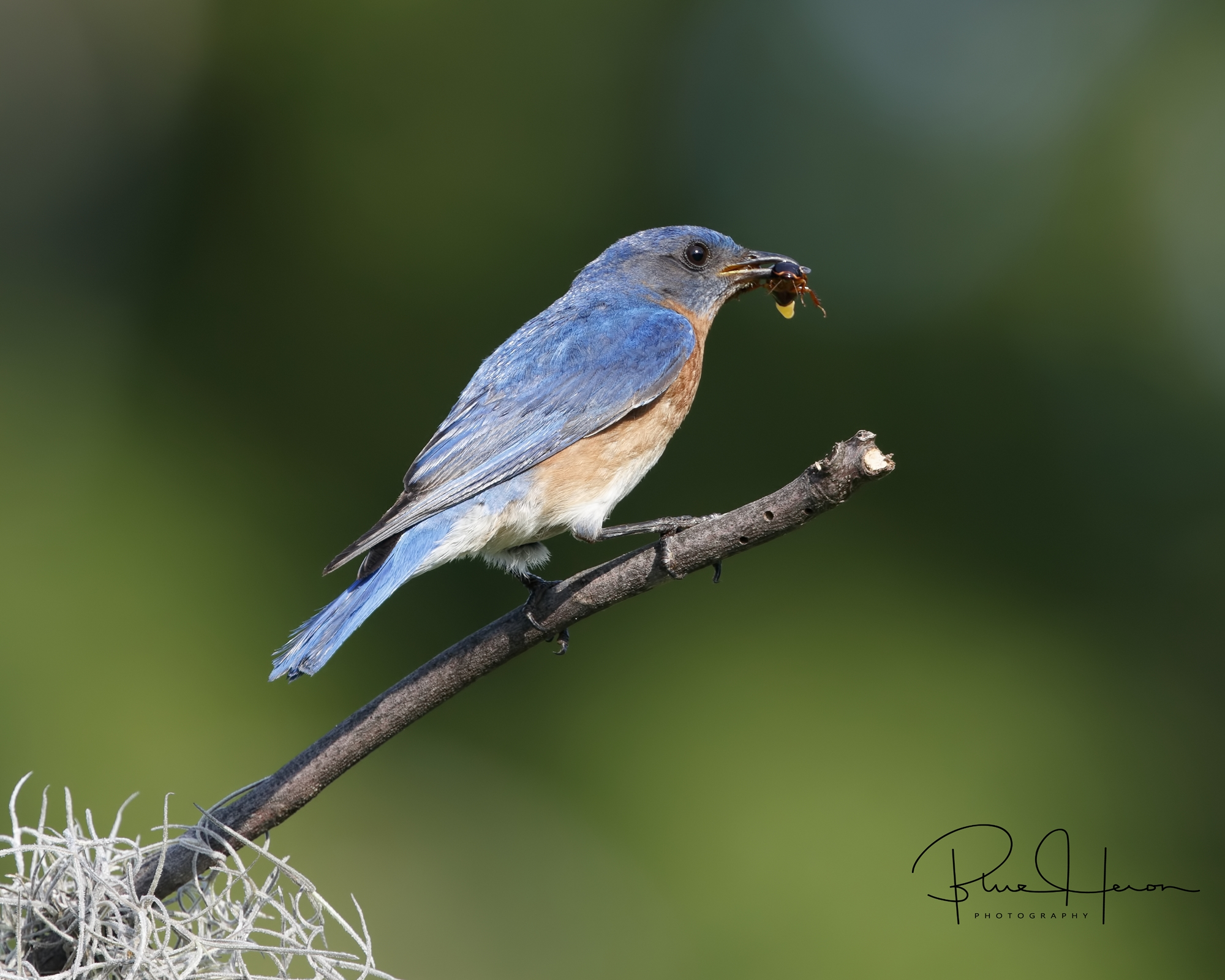 Daddy Bluebird is always on watch and providing for the babes..Just like our heavenly Father does..