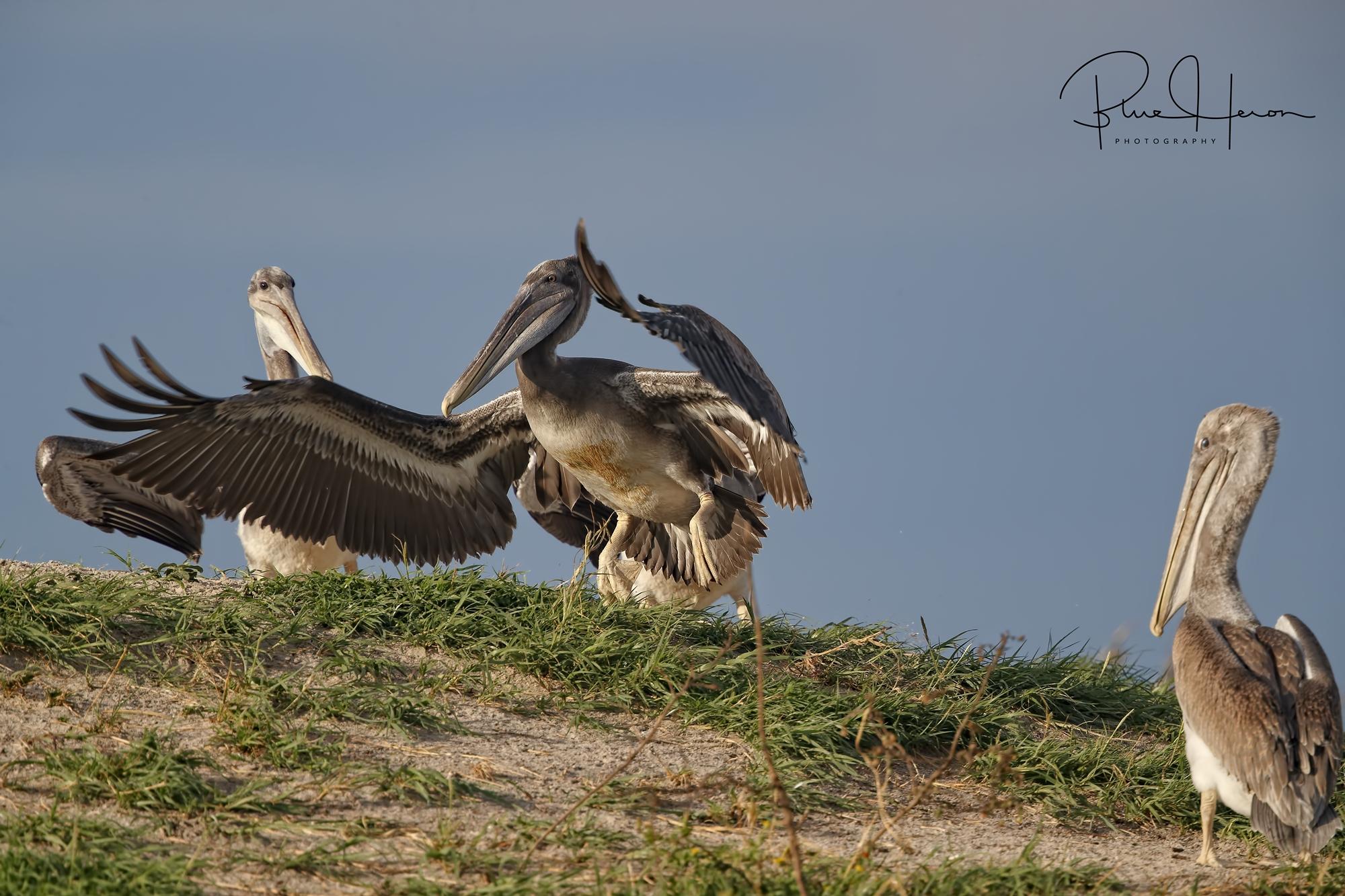 Bradford lifts off the dunes...