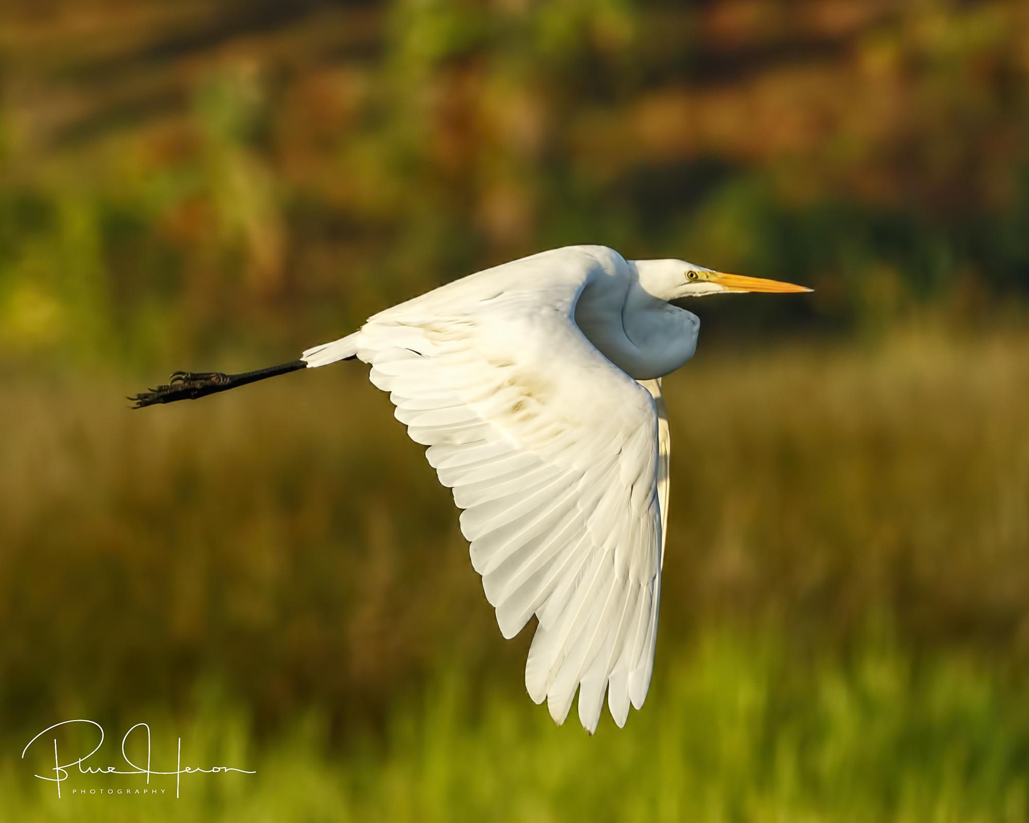 Facebook photo taken a year ago of perhaps the same bird, same day as the above photos…De Ja Vu all over again..