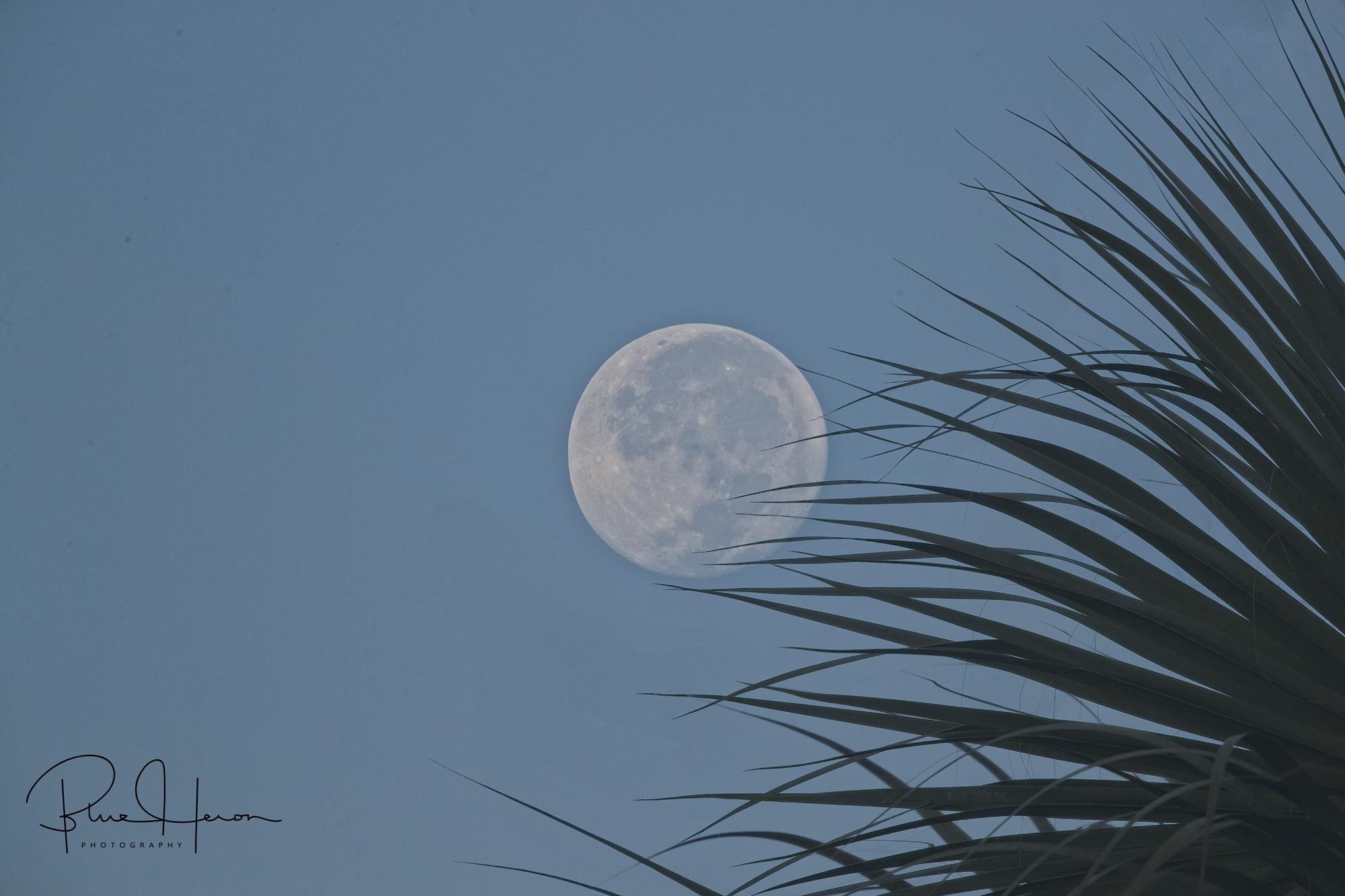 Morning harvest moonset over the Broward