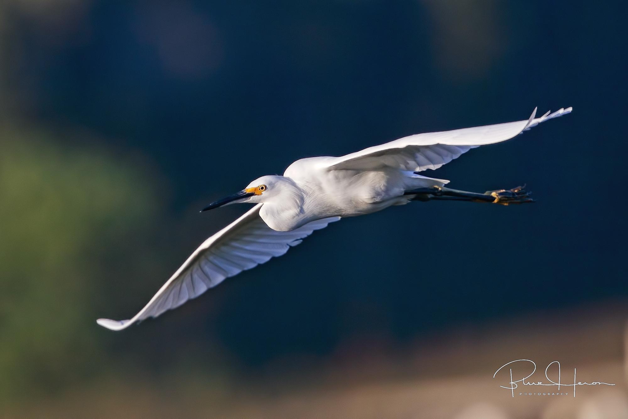 Snowy Flurry fly by..