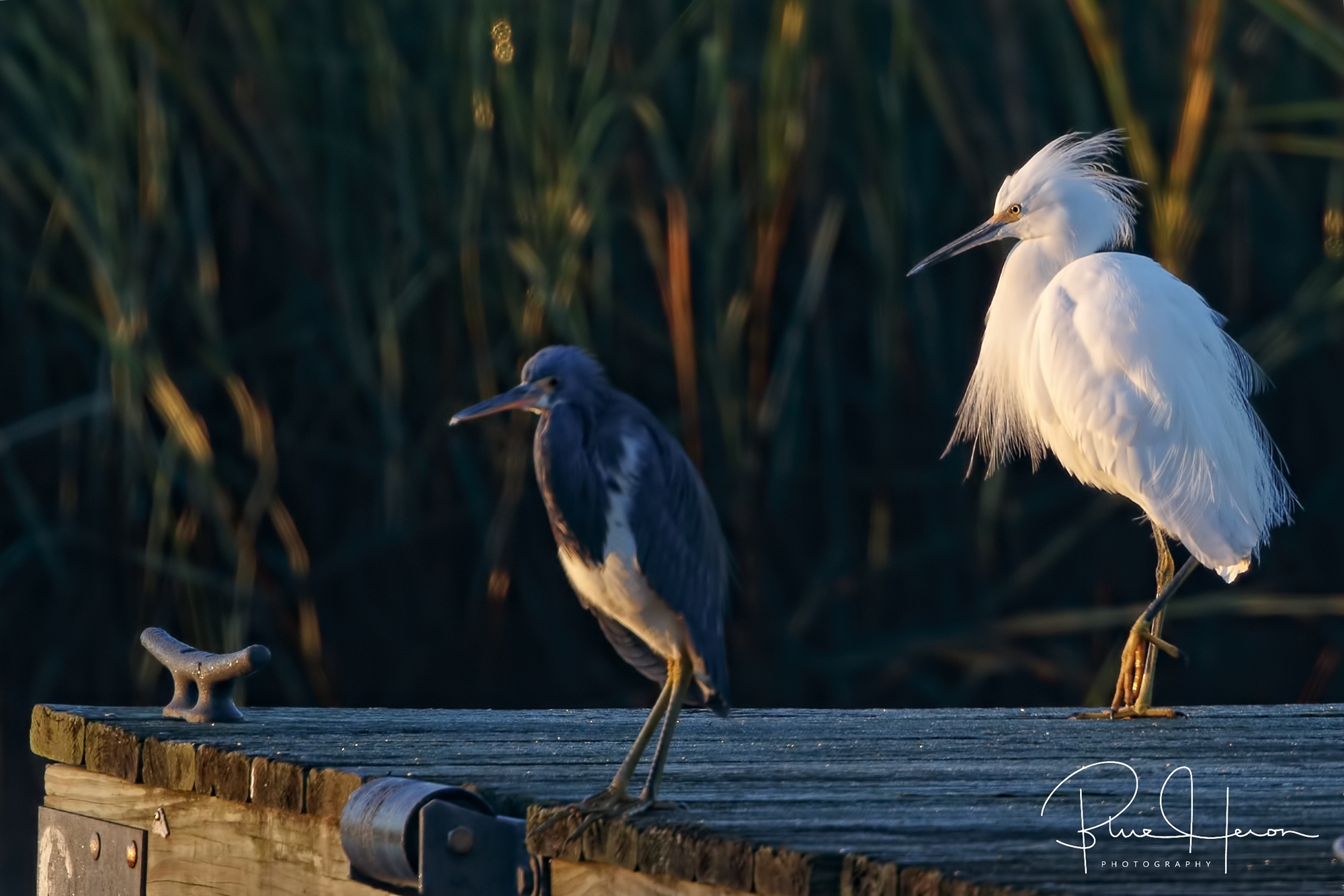 Early morning dock buddies wait for the light..