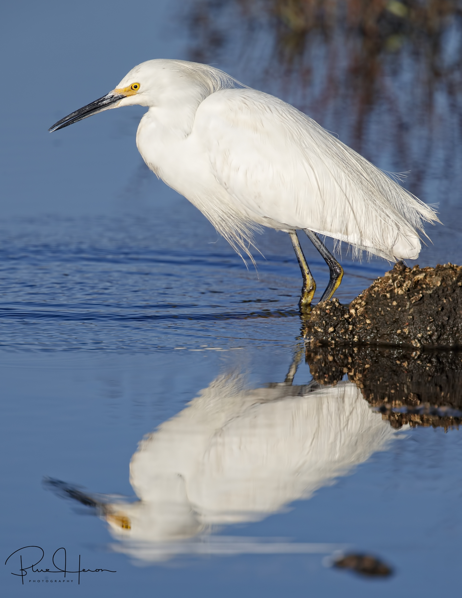 The only snow we are seeing is the Snowy Egret kind..