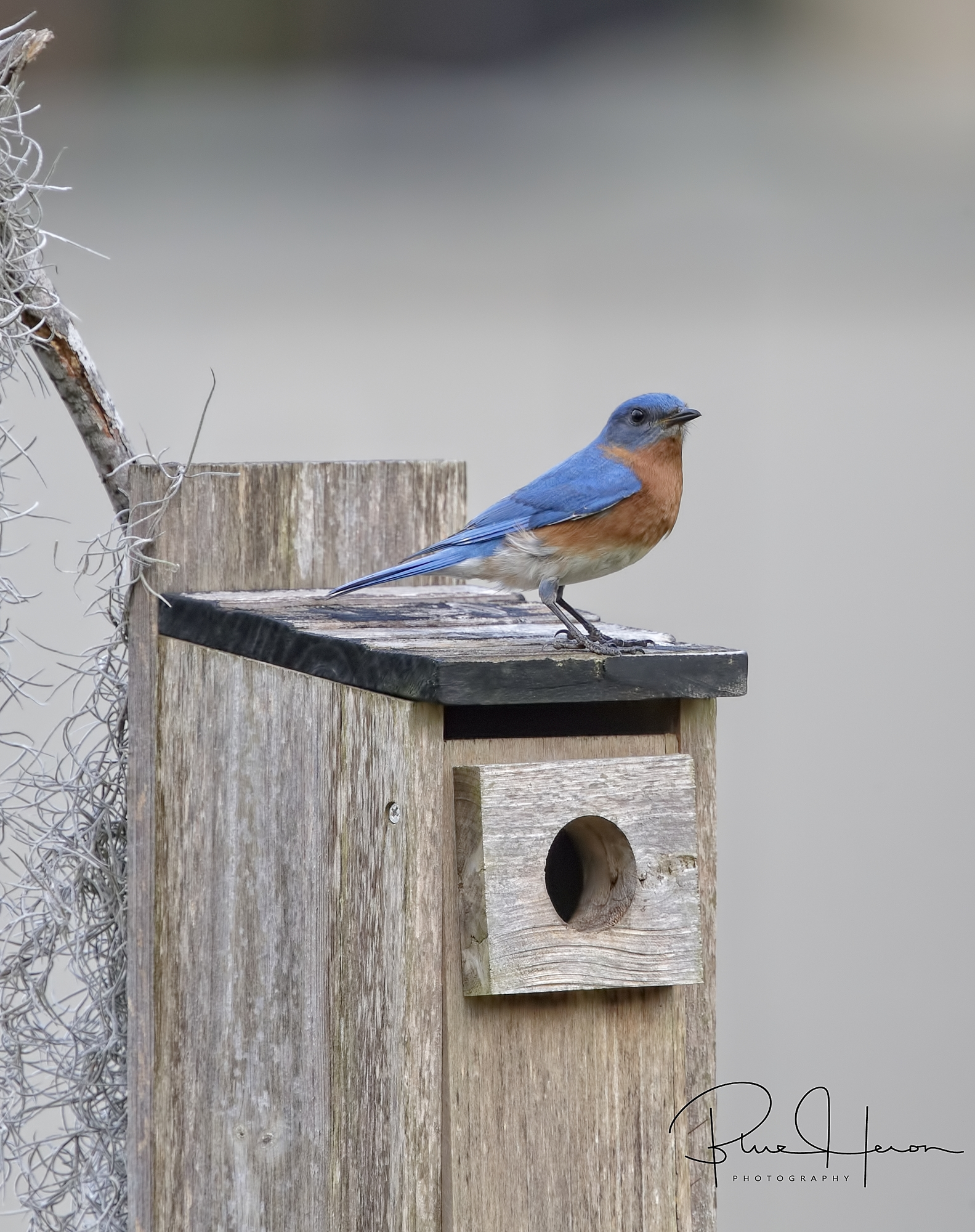The nest is now empty, the job is done..a job well done for two busy Bluebirds..