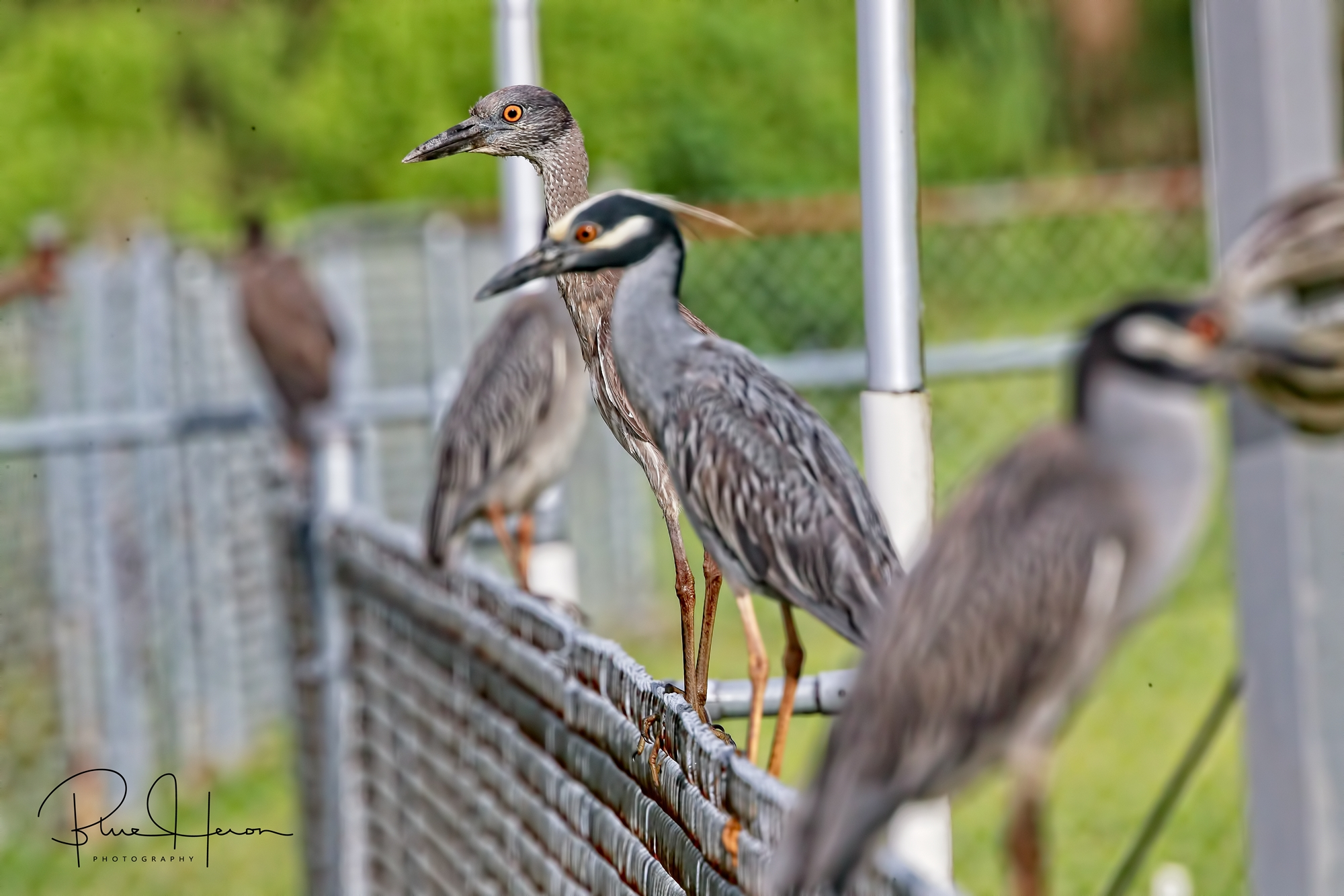 The whole family lined up on the fence to bid us farewell…