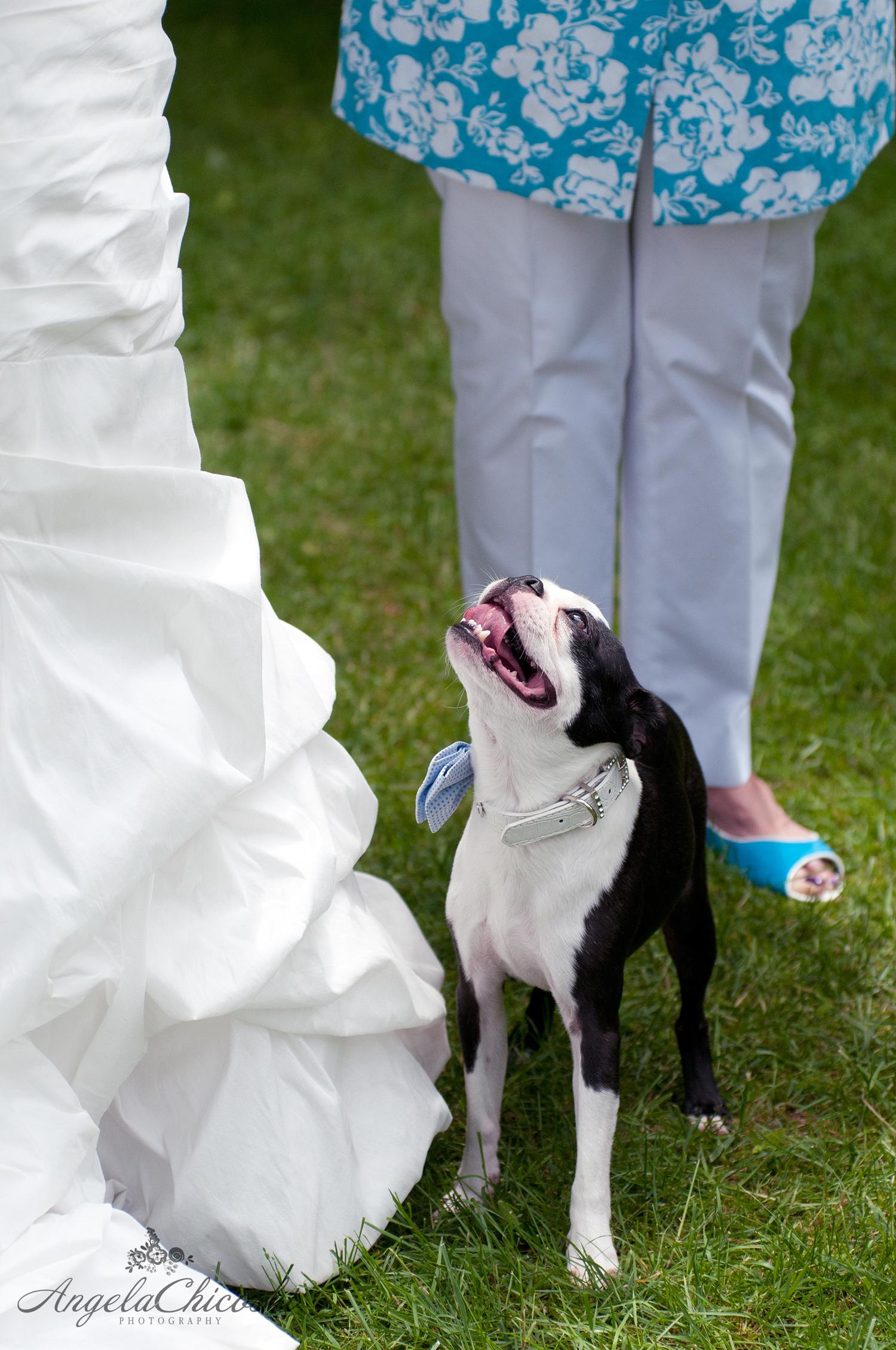 Angela_Chicoski_CT_wedding_photographer_019.jpg