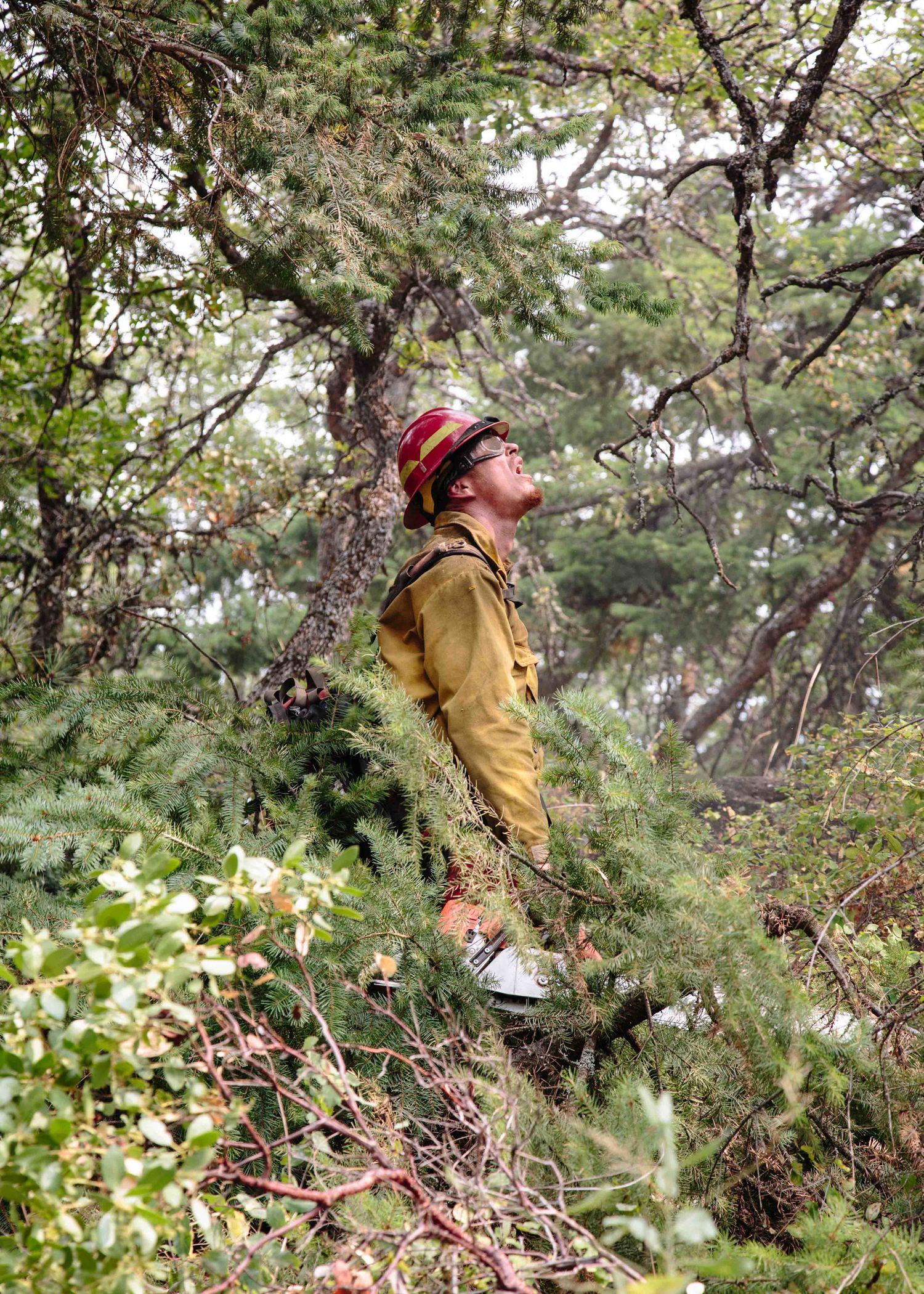 wildfire_194.jpg