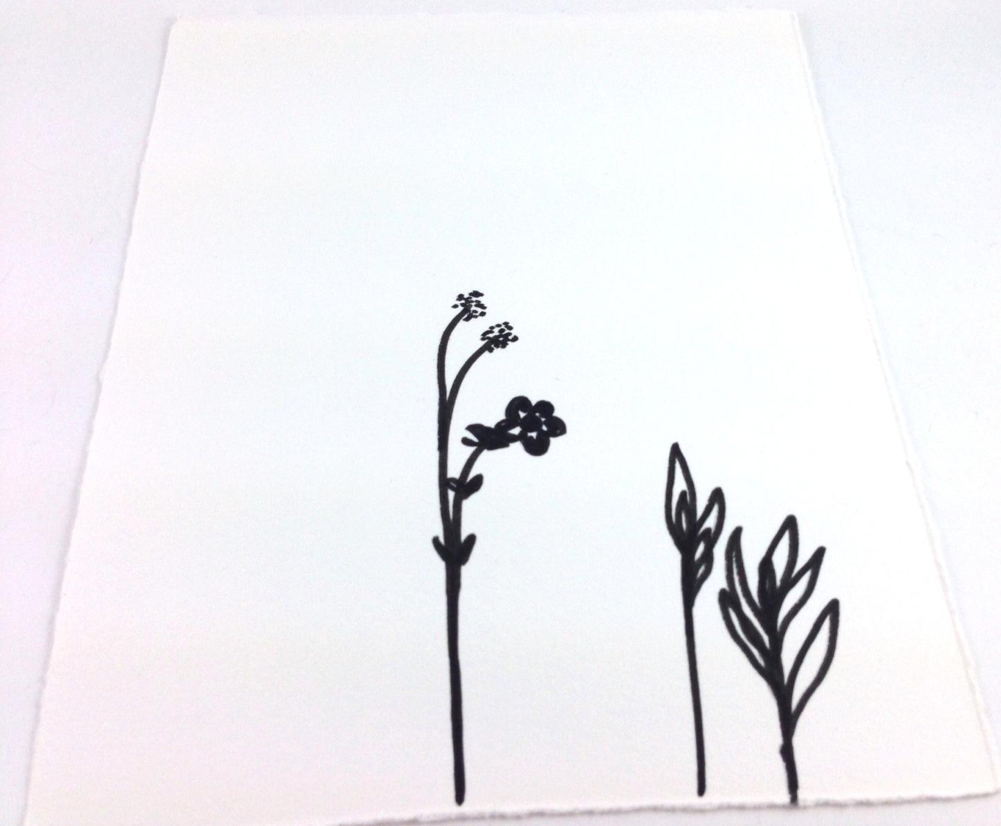 blooms sketch.jpg