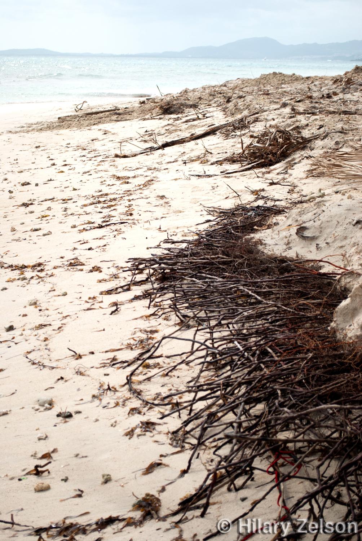 _DSC2306 copy Roots Along the Shoreline new ©.jpg