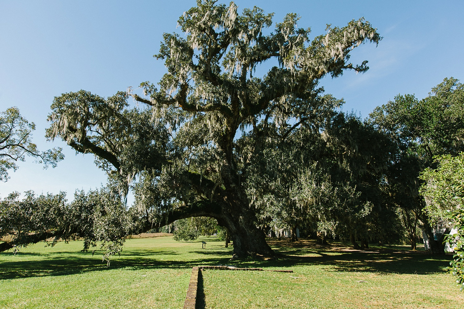 Lindsey_A_Miller_photography_charleston_mcleod_plantation_wedding_row_of_oaks_southern_classic_fall_spanish_moss_historic_home_001.jpg