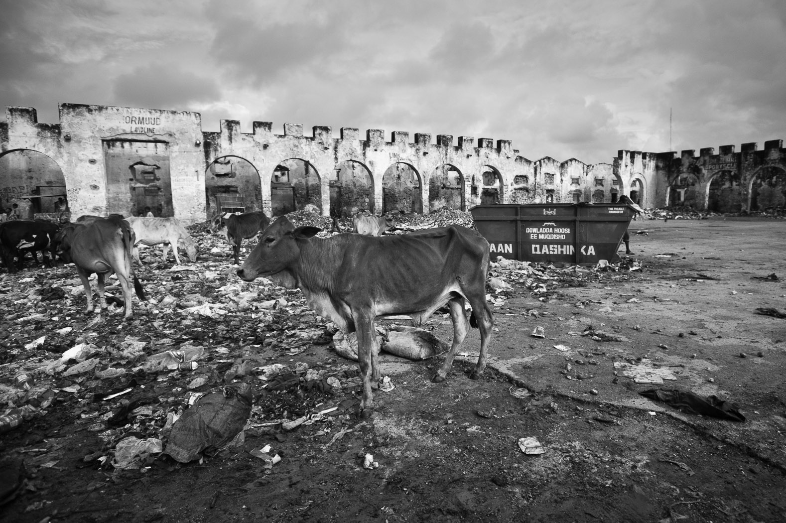An emaciated cow grazes on trash in Mogadishu's Hamarwayne district. Hamarwayne used to be one of the busiest areas of the city, with this site being the former gold souq.