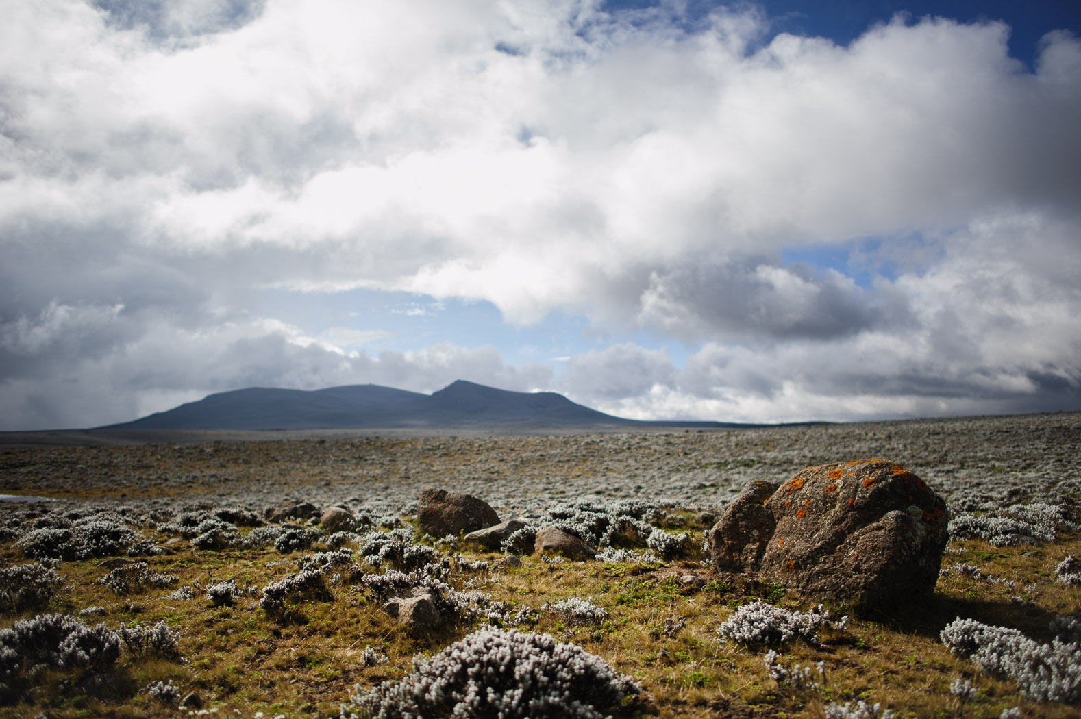 "In the Bale Mountains, the wolves live on the Sanetti plateau, ""the Roof of Africa"", at an average altitude of 4000 metres, crowned by Tullu Deemtu (pictured, background), the second highest mountain in Ethiopia at 4377 metres."