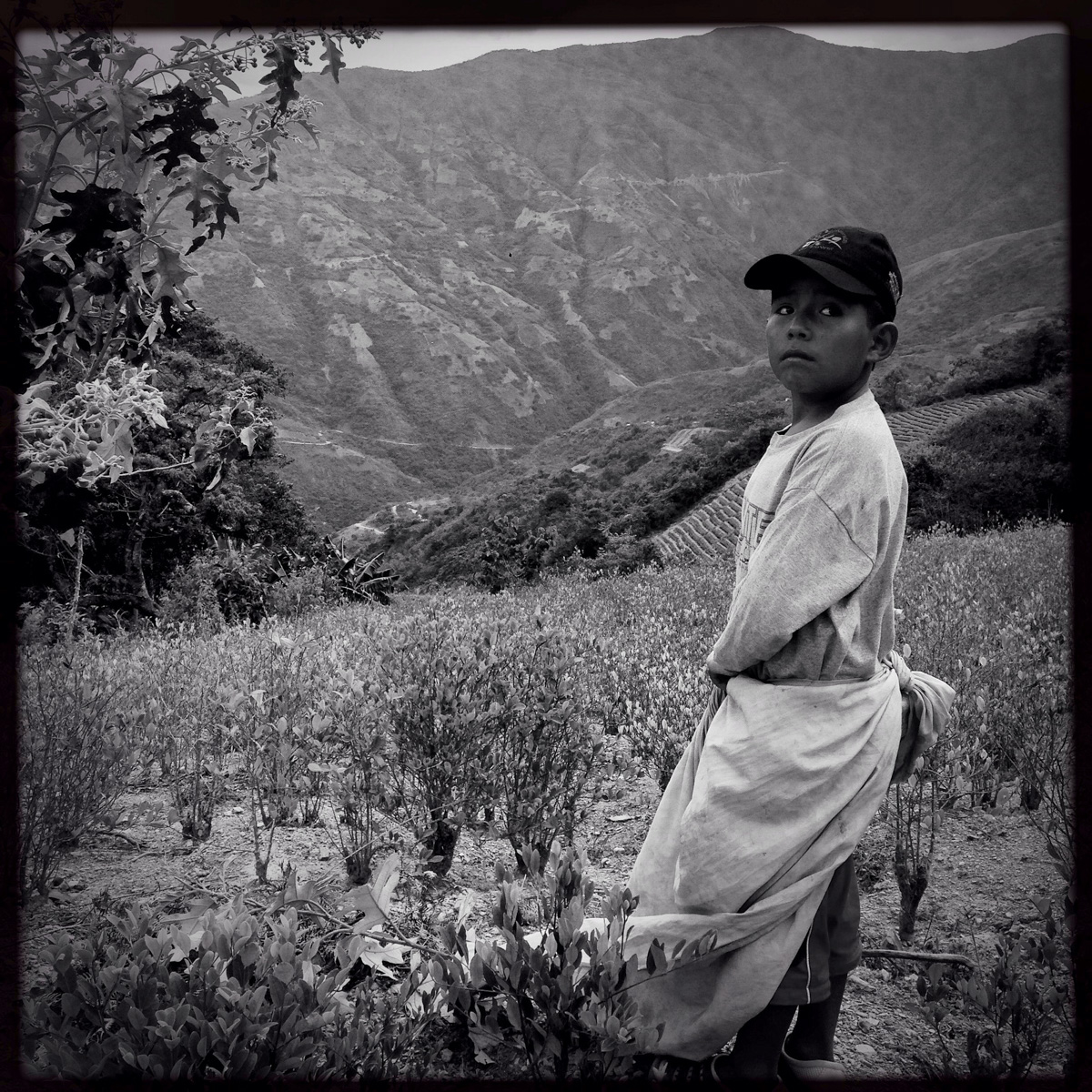 Nine year old Brandon works picking coca in the  cocales