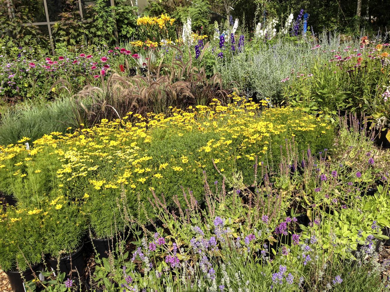 Perennials.jpg
