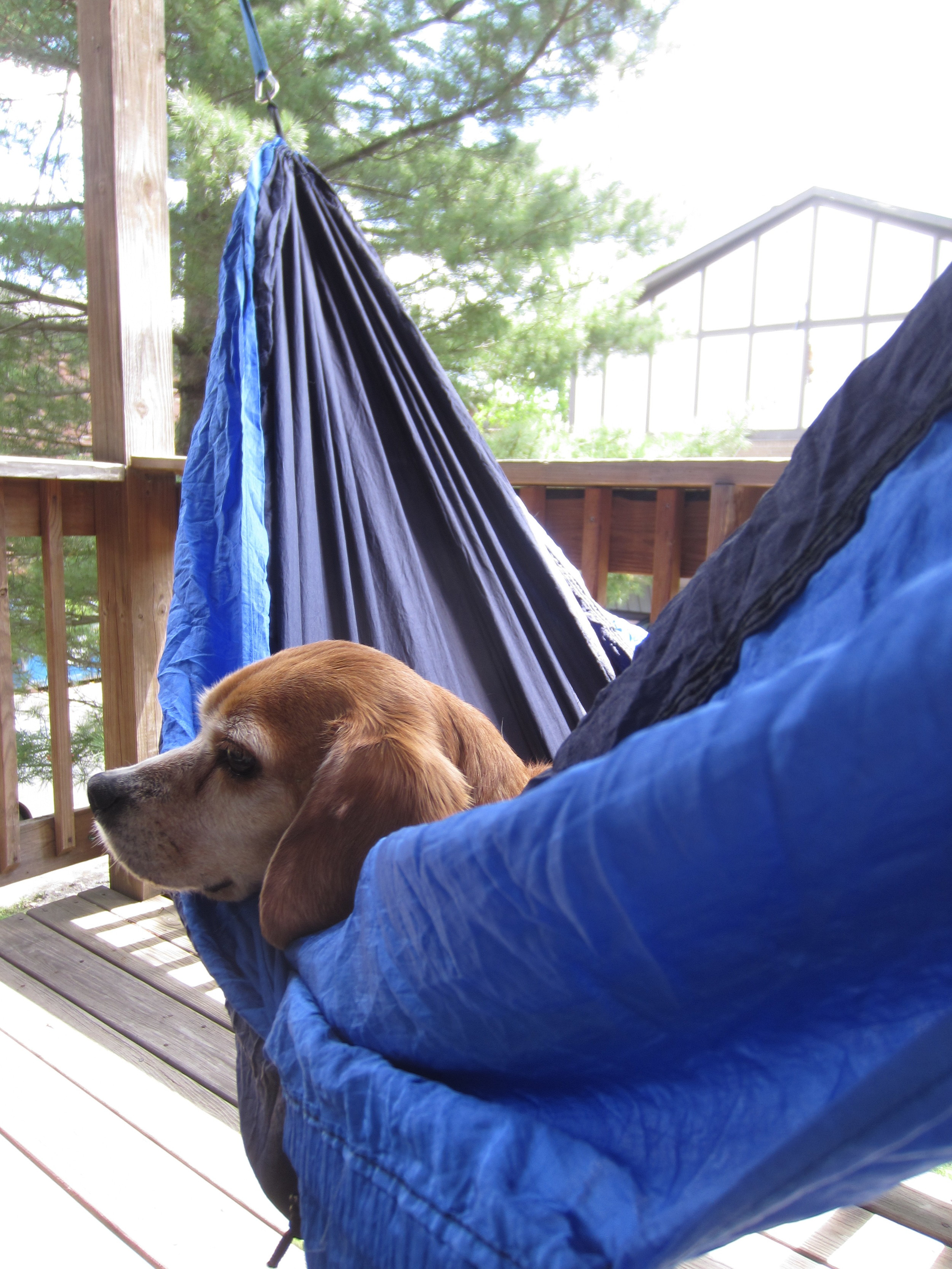 I'm not the only one who enjoys a sunny afternoon in the hammock.