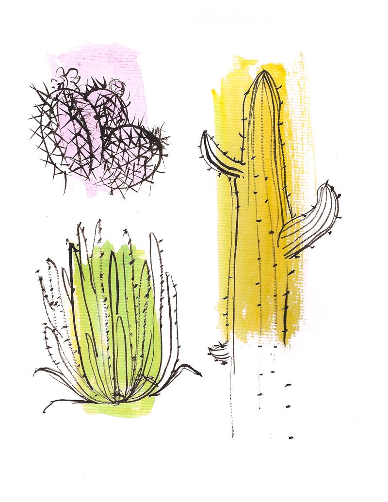 jillian cacti.jpg