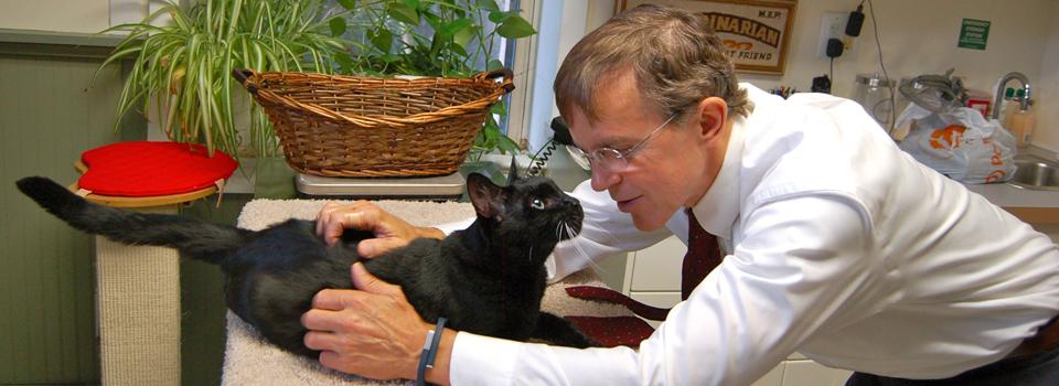Dr-Peterson-exam-black-cat-Bedford.jpg