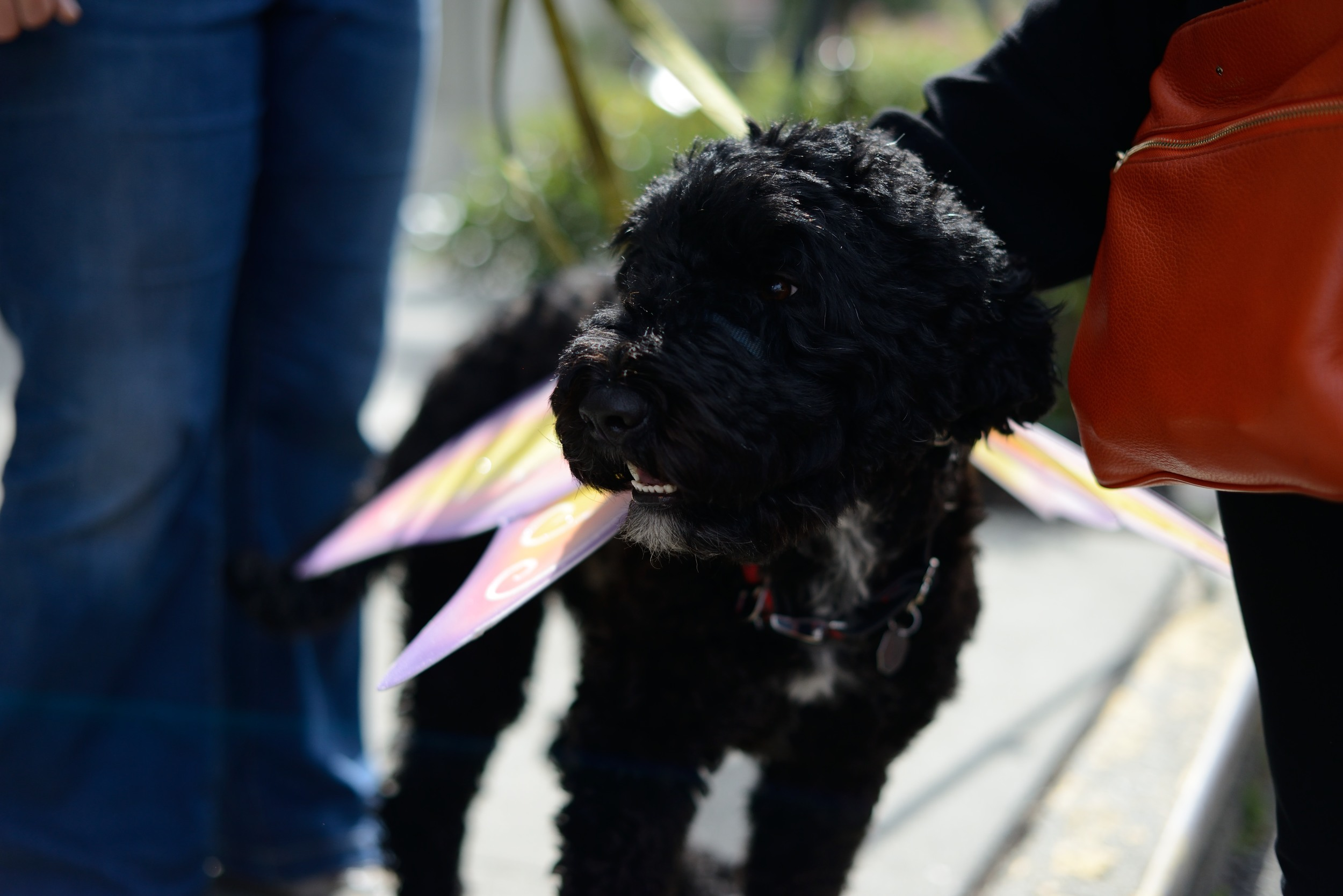 Even Goose, the office dog, gets in the pollinator spirit with butterfly wings.