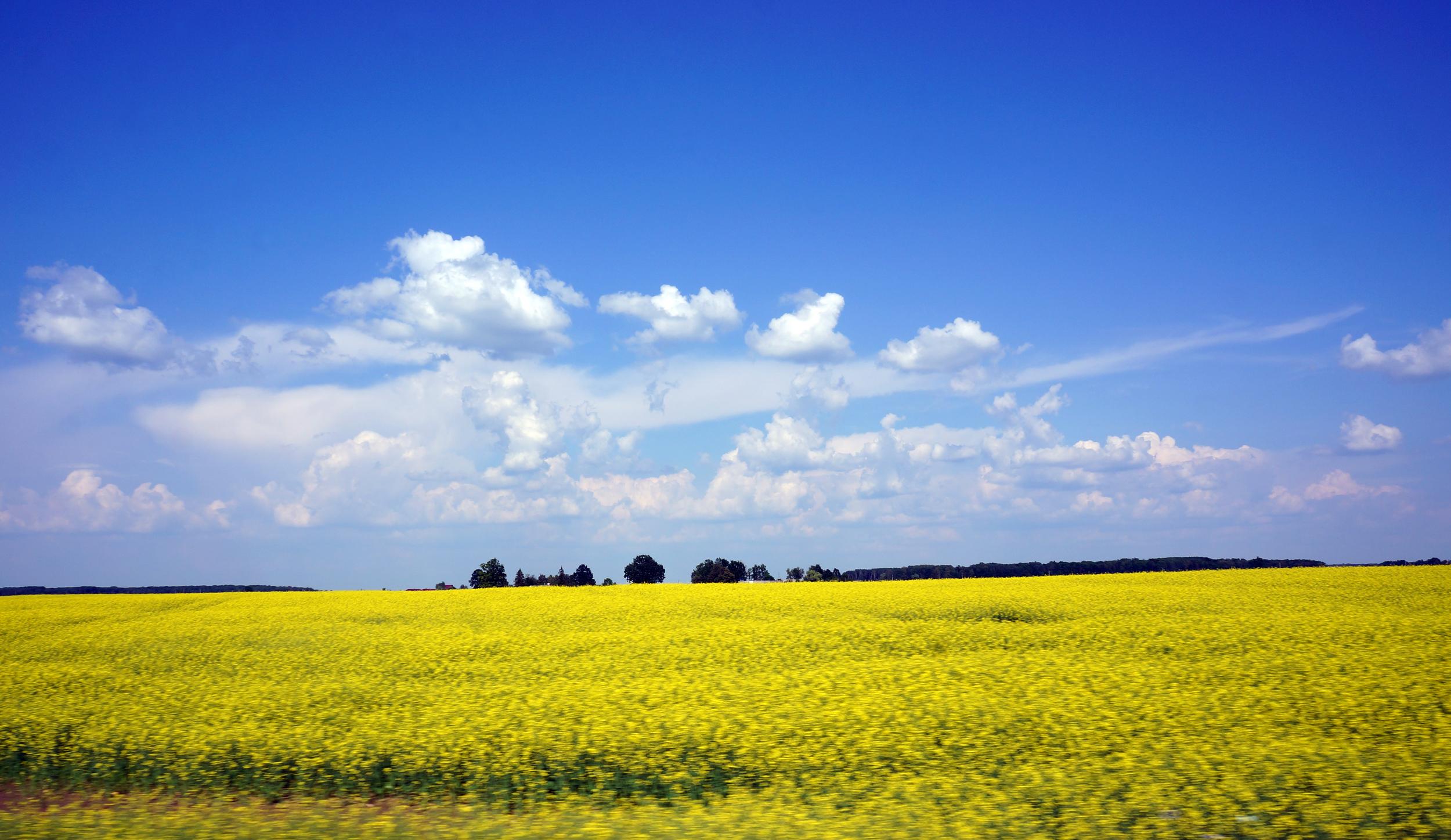 Latvian Countryside- Christopher