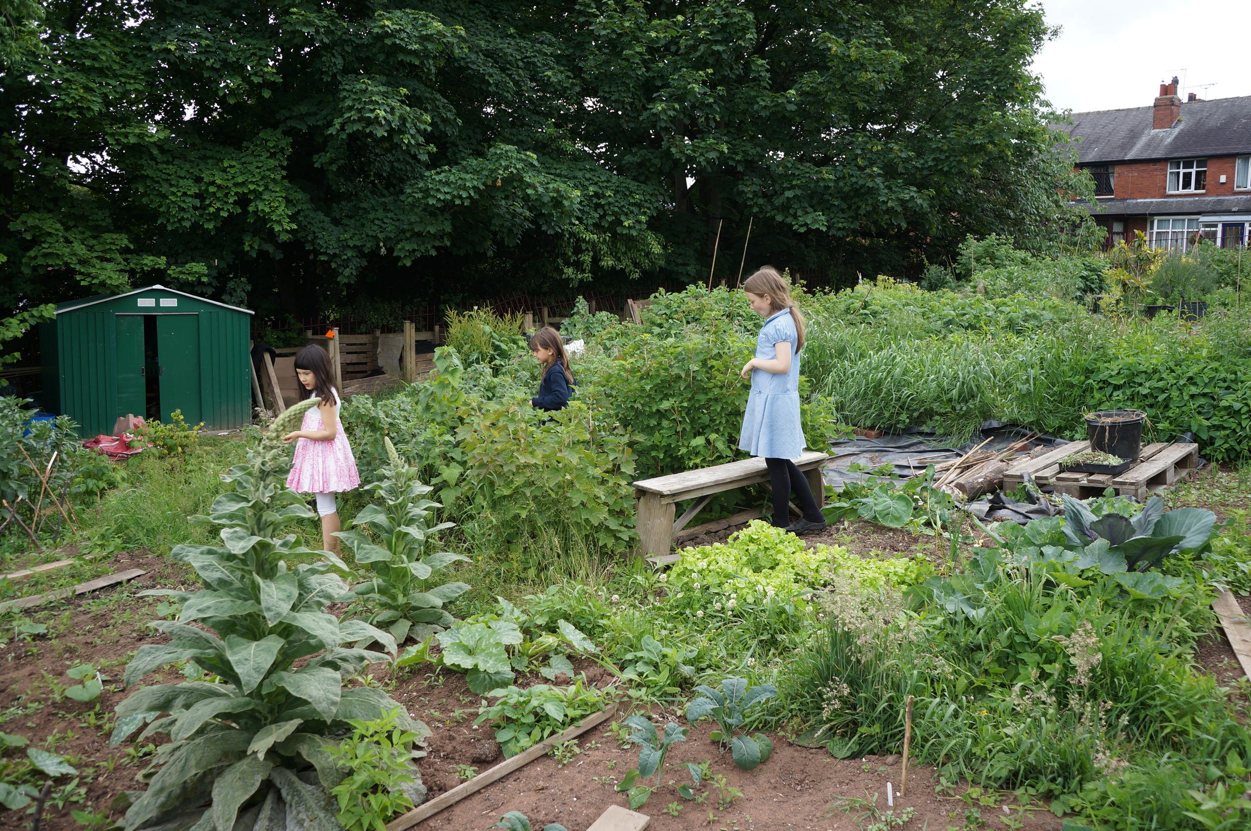Lilac community garden.JPG
