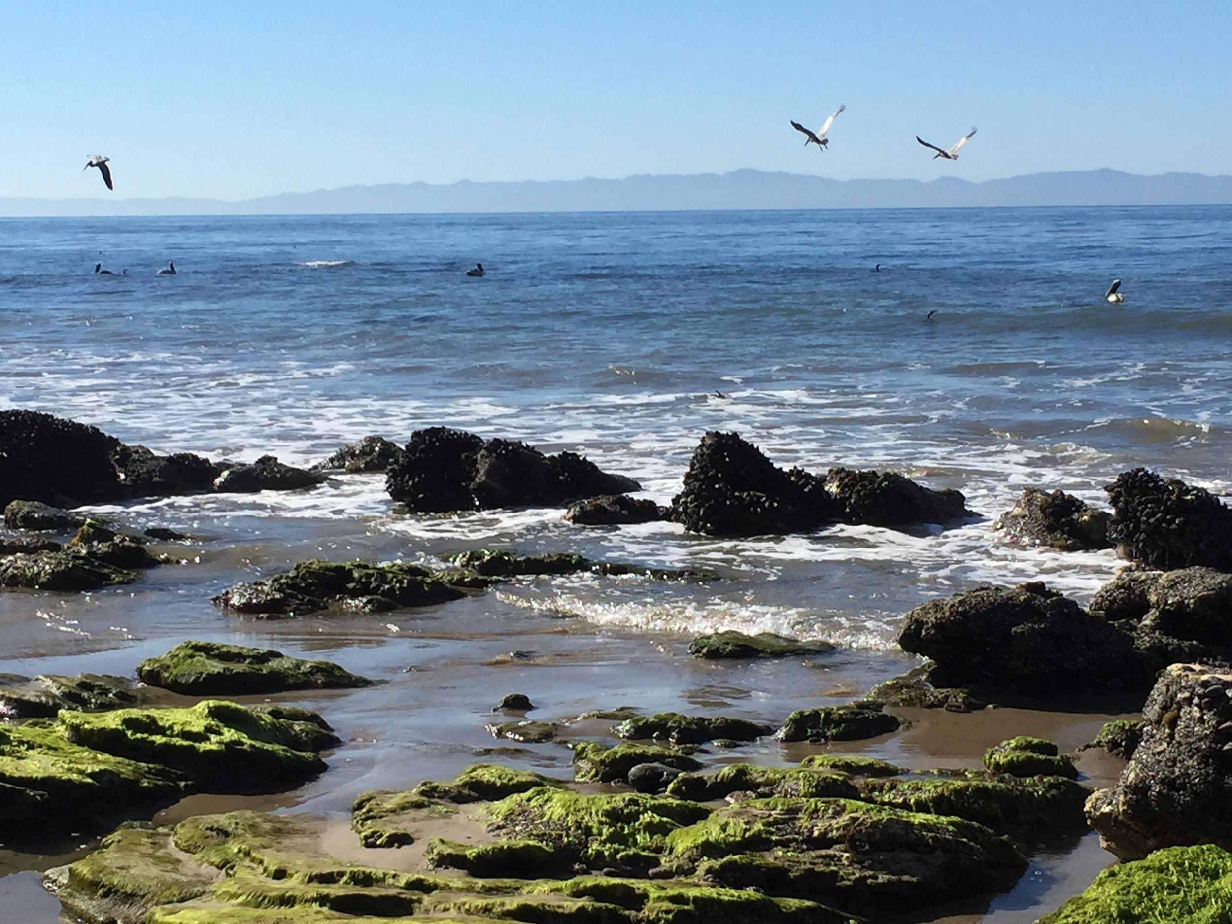 Morning at the Beach~Santa Barbara, CA