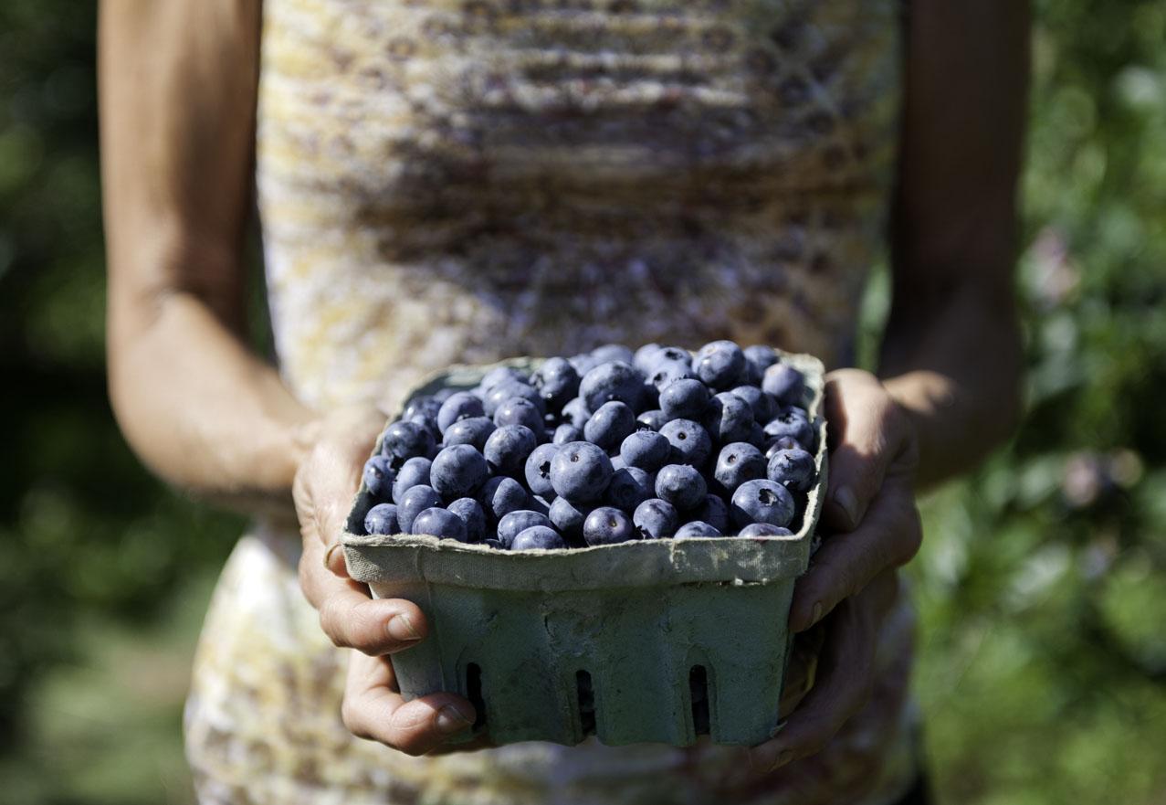 hand held berries.jpg