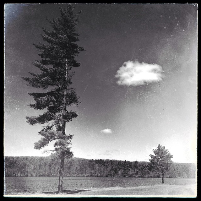 A walk, a tree and a cloud... #westernma  #holyoke #traceyellerstudio