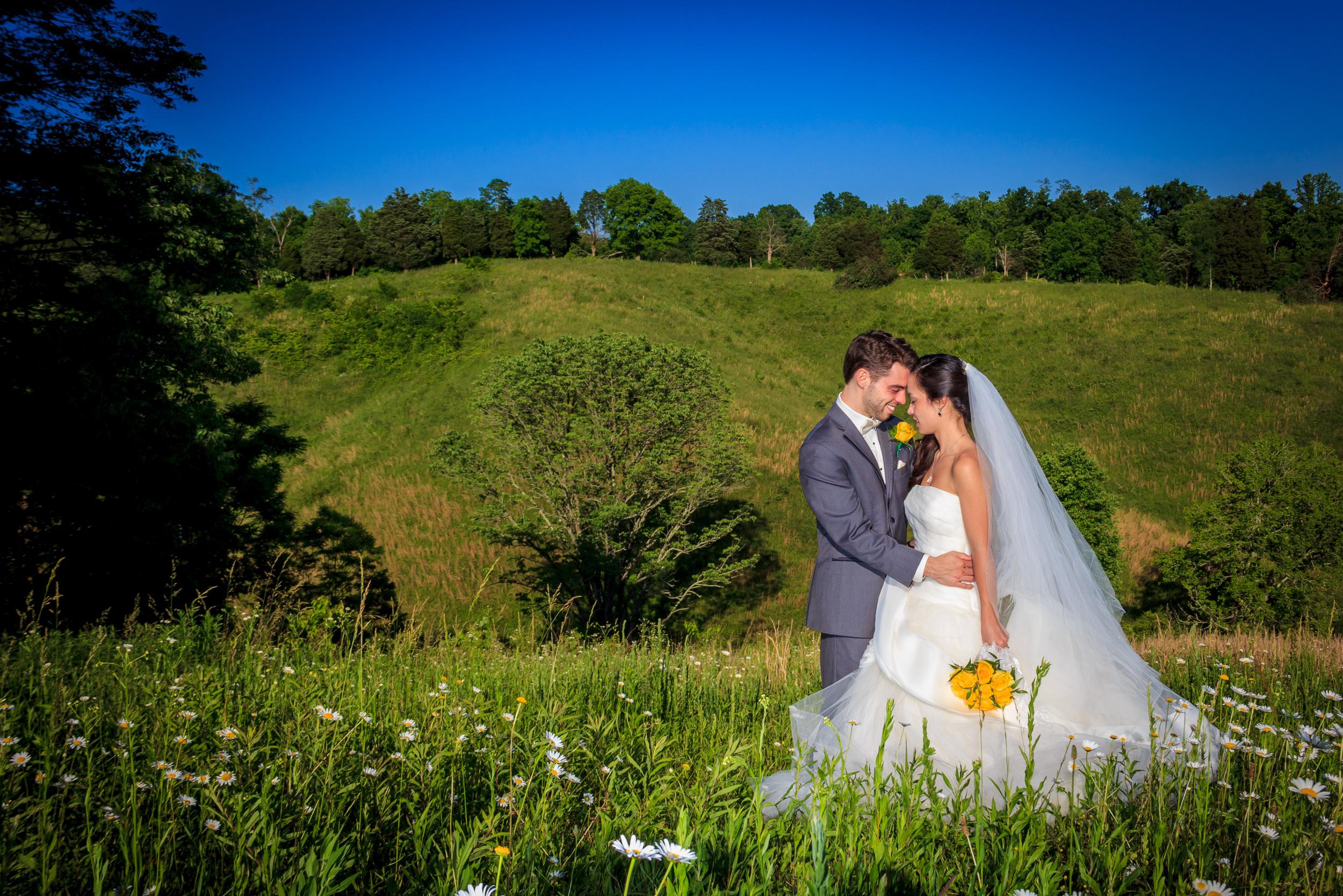 wildflower-fields-daisies-wedding.jpg