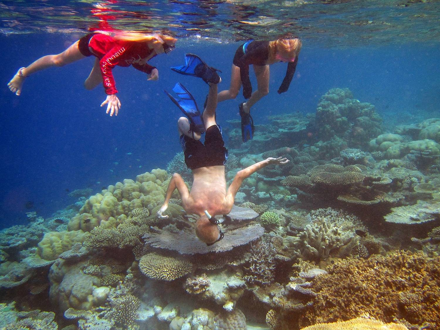Kids check out a turtle under a coral head in Maldives - www.sailingtotem.com - 'On the Wind' Sailing Podcast: Episode #175