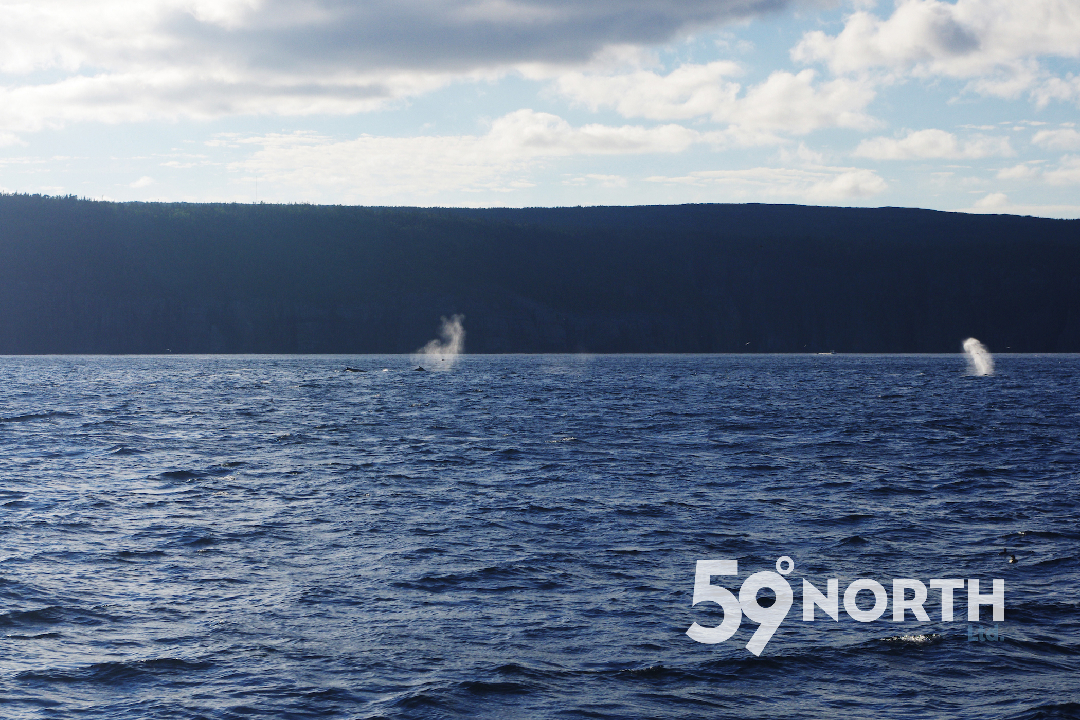 Lots of whales around the boat as we sailed up the coast on the way up to St. John's, Newfoundland. One of the many highlights of 2016! July 2016