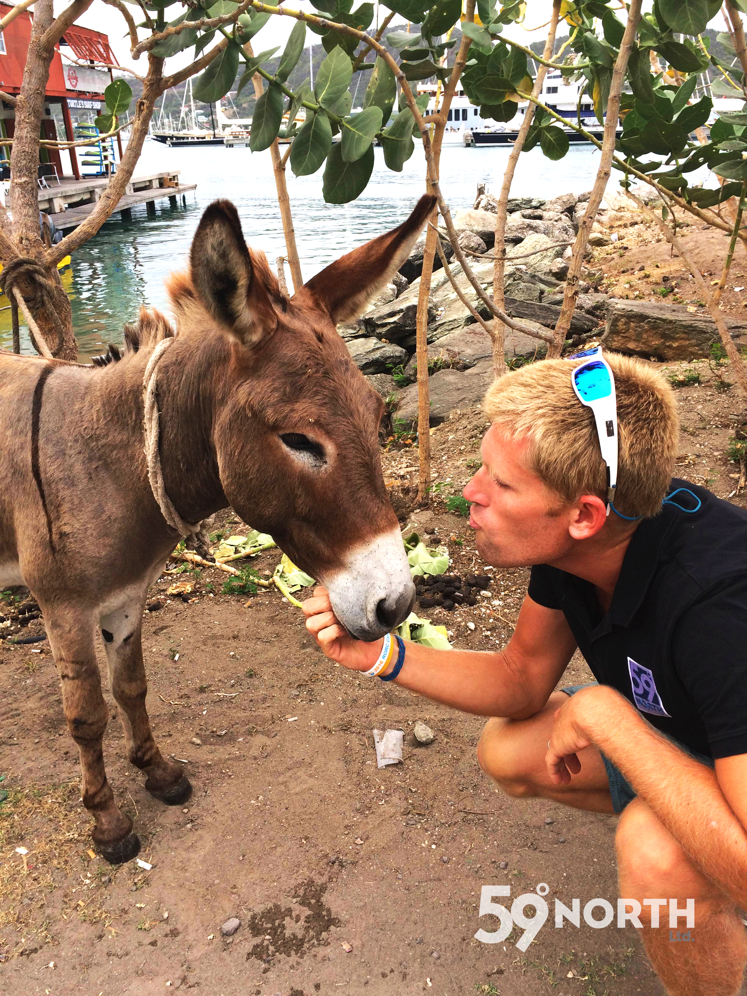 Donkeys and goats roam freely around the island of Antigua and they also have a donkey sanctuary that we visited one day on our scooter ride around the island! March 2016