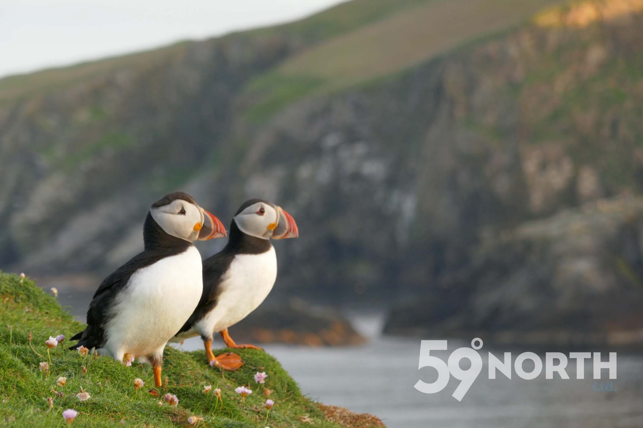 Lots of Puffins and amazing bird life at Fair Isle!!  Leg 8, 2017: Sweden to Scotland 59-north.com