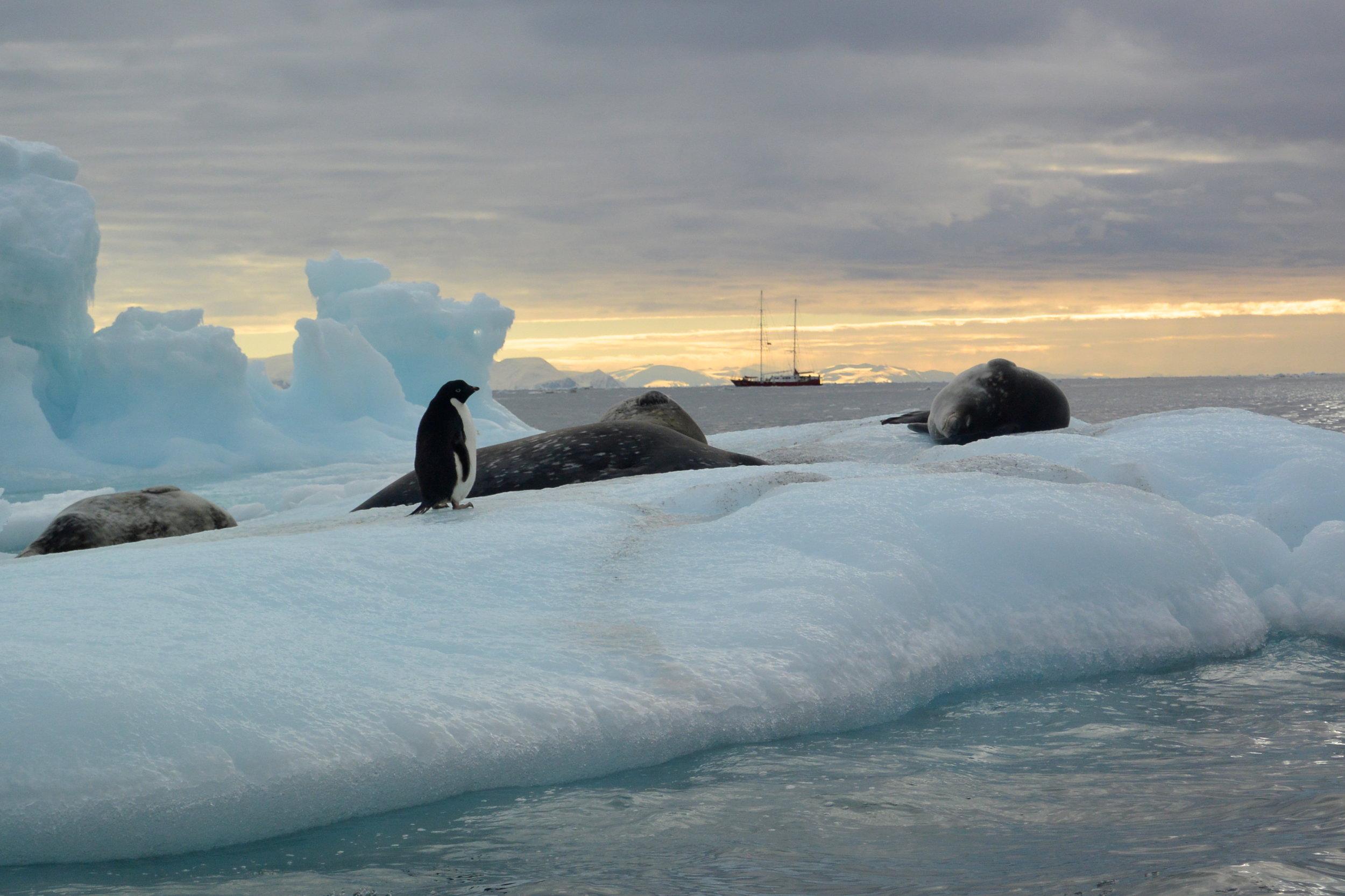 on anchor in antarctica.JPG