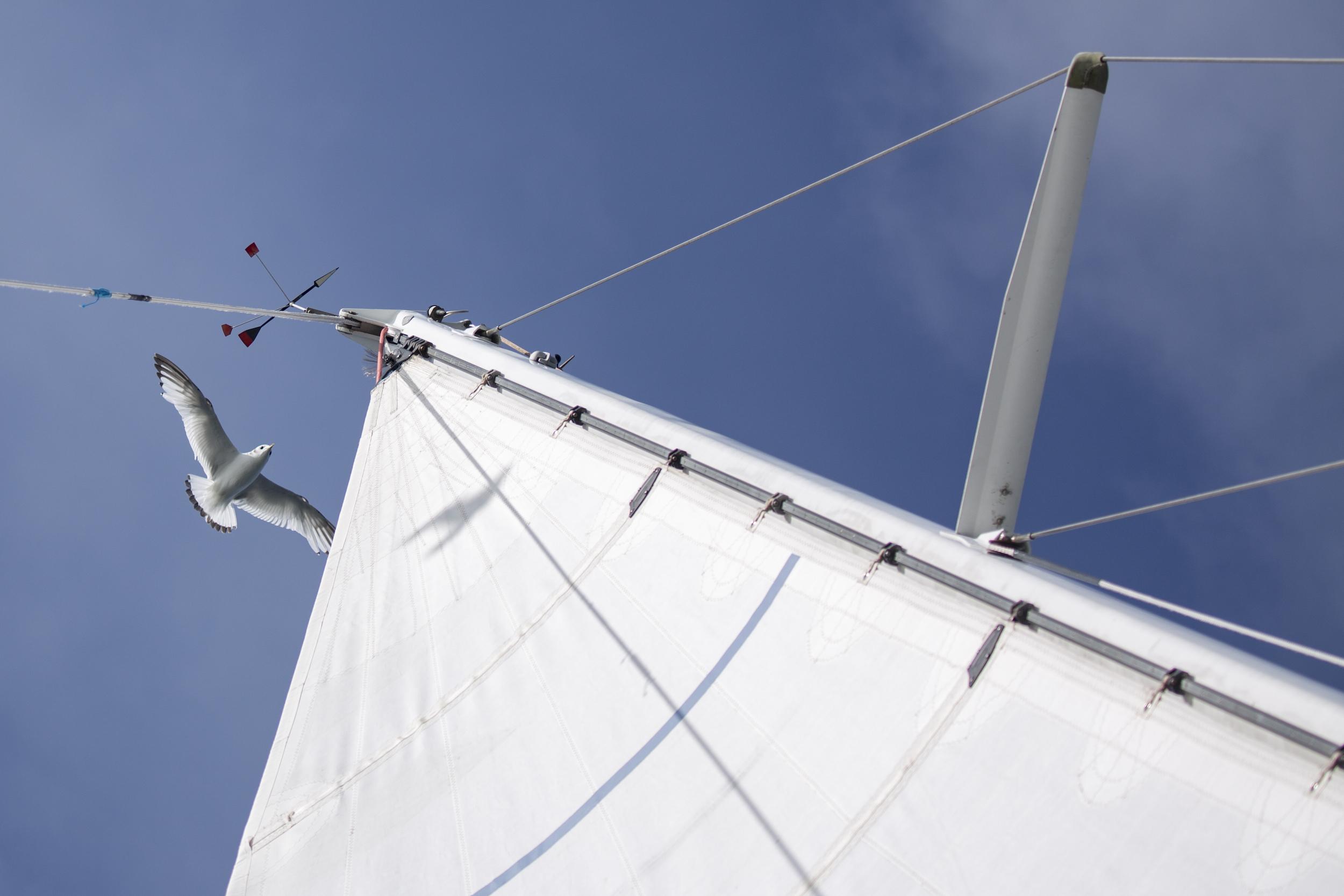 Gul matching Isbjorn's windvane offshore en route to Svalbard.