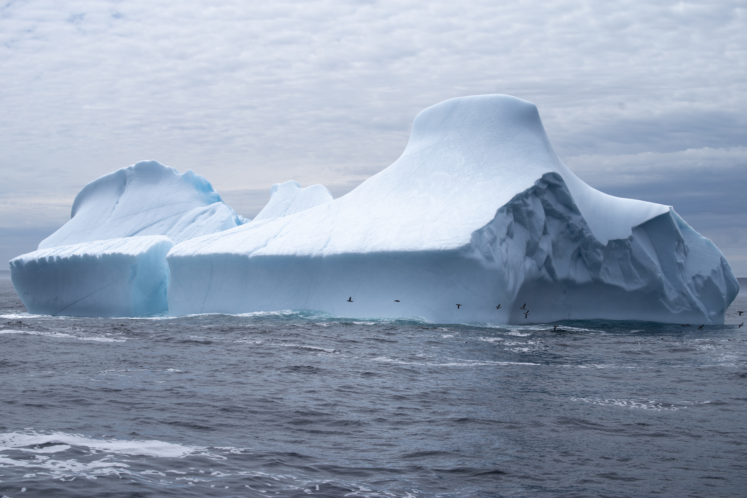 A flock of guillomots on an iceberg fly-by.