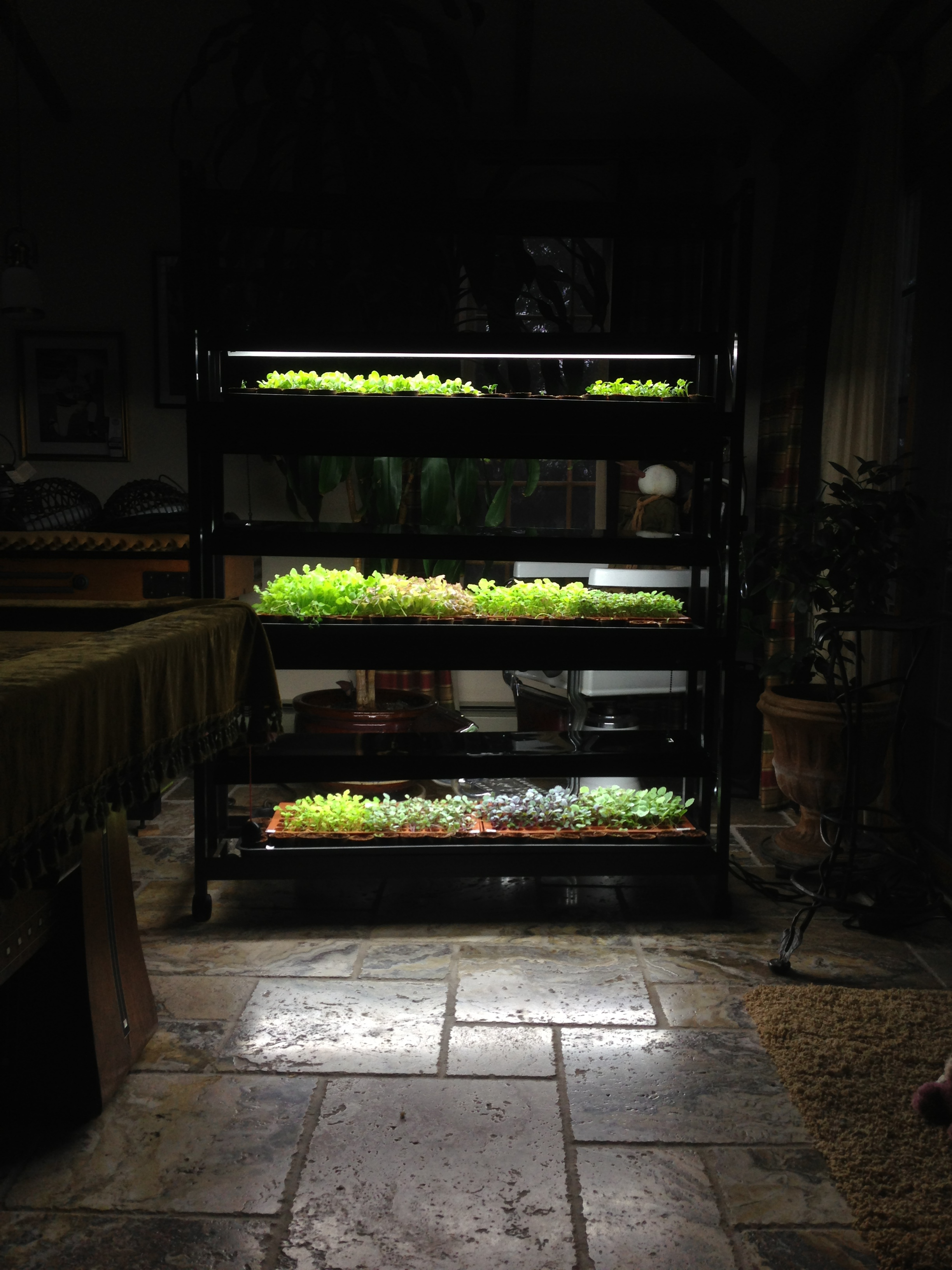 Our indoor seedling station. We have a bunch of lettuces, turnips, beets and more waiting to get planted in the next week!