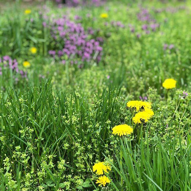 In the weeds 😍 #lmgf #springtime #weeds