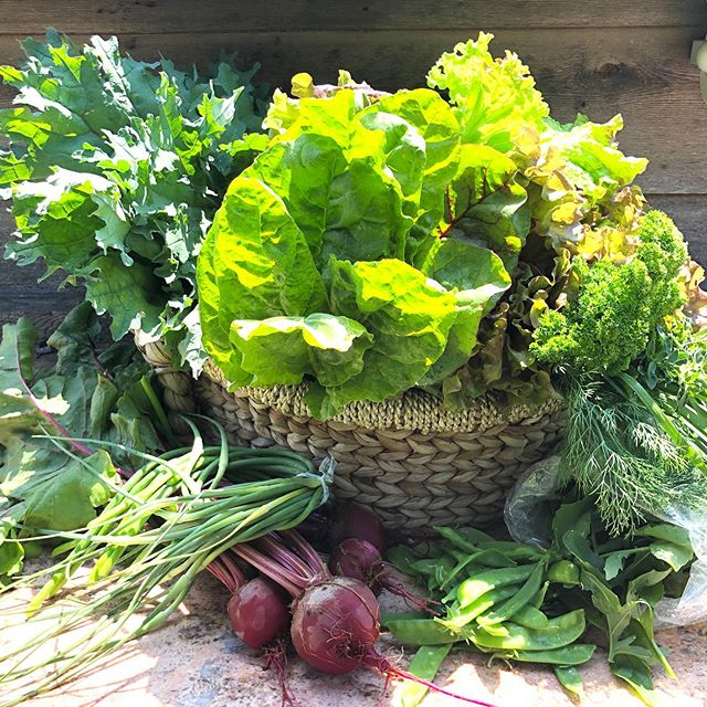 Dad's love veggies! Round off tonight's dinner with a big bowl of fresh greens, some roasted beets with scapes, herb butter and  sautéed kale 😋 We have some fresh red leaf lettuce, russian kale, rainbow chard, red beets with some lovely tops, snowpeas, spicy arugula, garlic scapes and a killer herb bouquet. Show dad you love him 💚 #springbasket #fathersdayfood #thisweeksbasket #lmgf