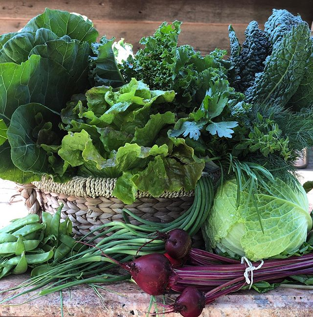 This week's basket is 😋! We got collards, curly and lacinato kale, green or red leaf lettuce, napa cabbage, beets, snowpeas, garlic scapes (last week for these!) and a gorgeous herb bouquet! We are sold out for today (Friday) but here all weekend! $40 a basket. Also eggs and honey are always available! 💚 #lmgf #greens #summerbasket